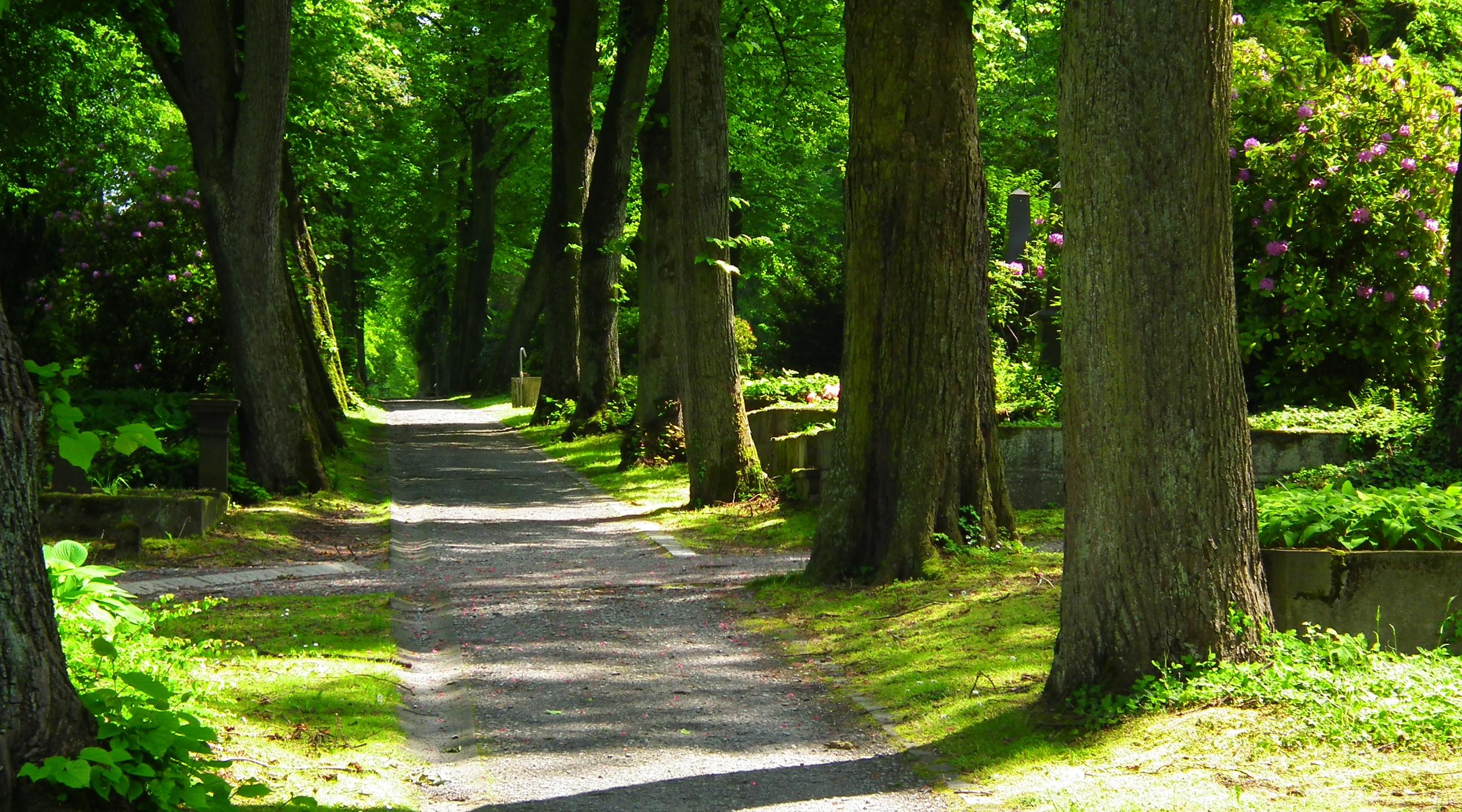 Fotos gratis paisaje rbol naturaleza planta sendero for Arboles para plantar en verano