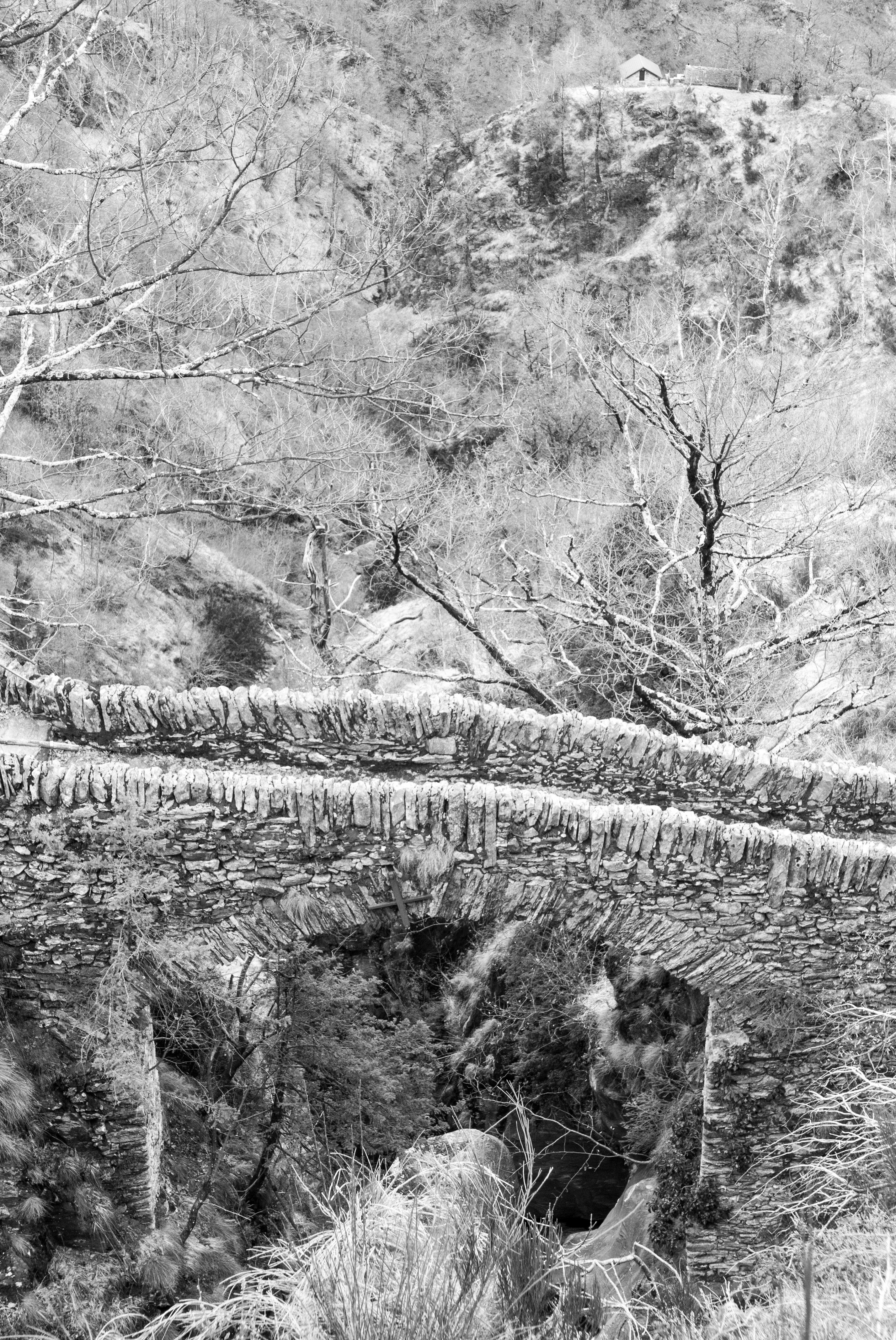 Immagini Belle Paesaggio Albero Natura Foresta La Neve Bianco