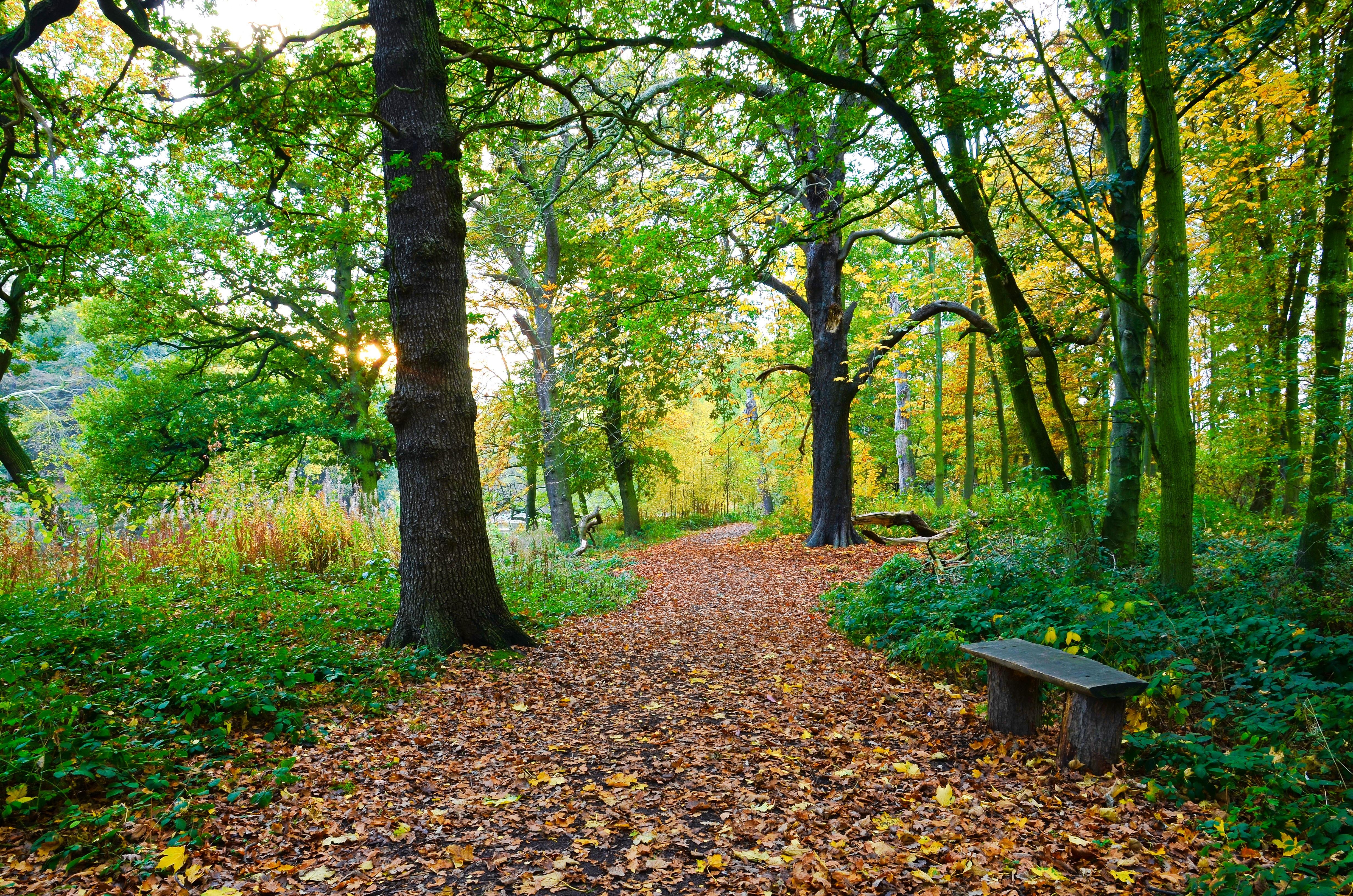 осенние аллеи в лесах и парках картинки сегодня хочу пожелать