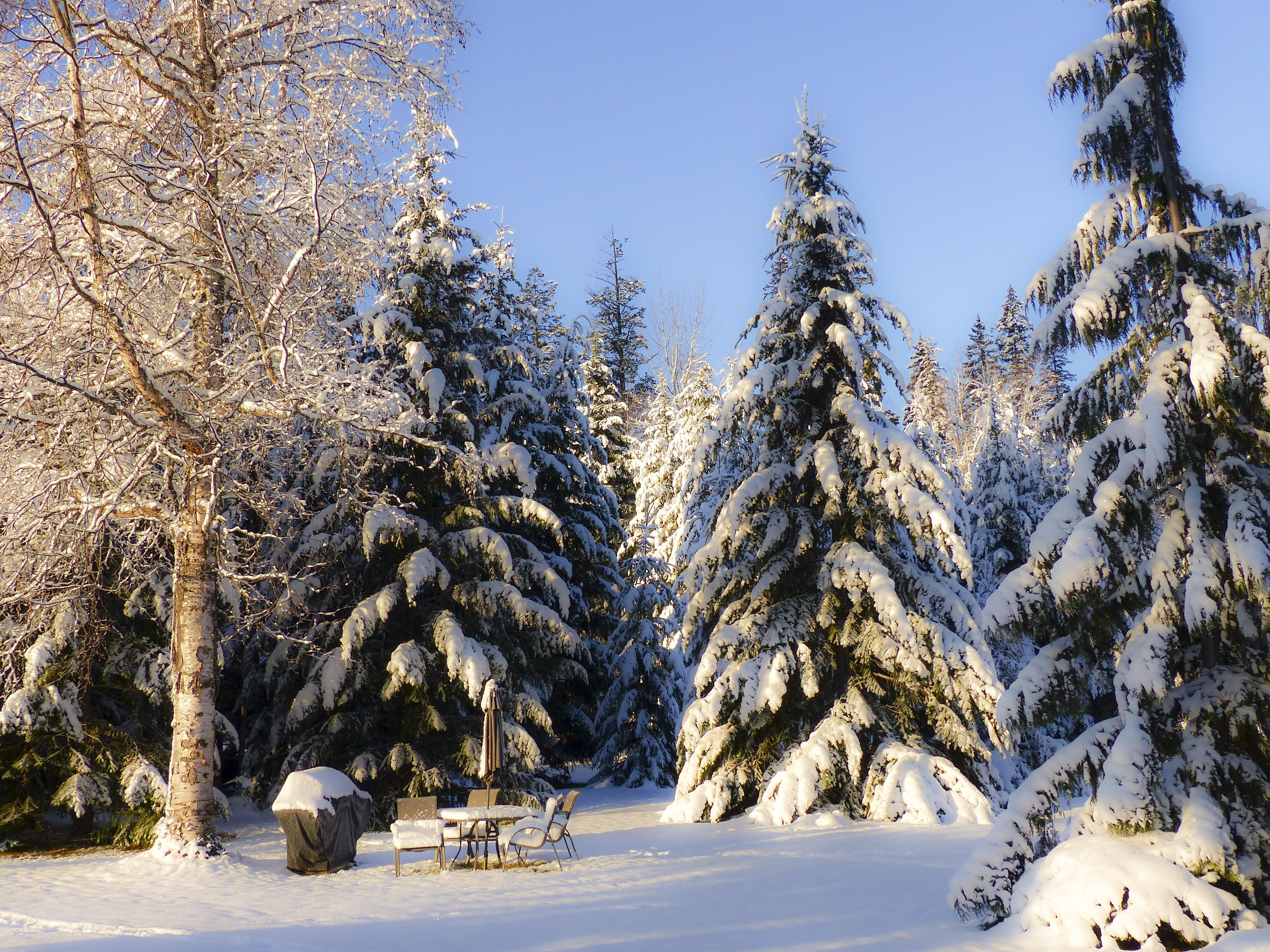 сорт, они, фото зимнего леса под новый год люди могут