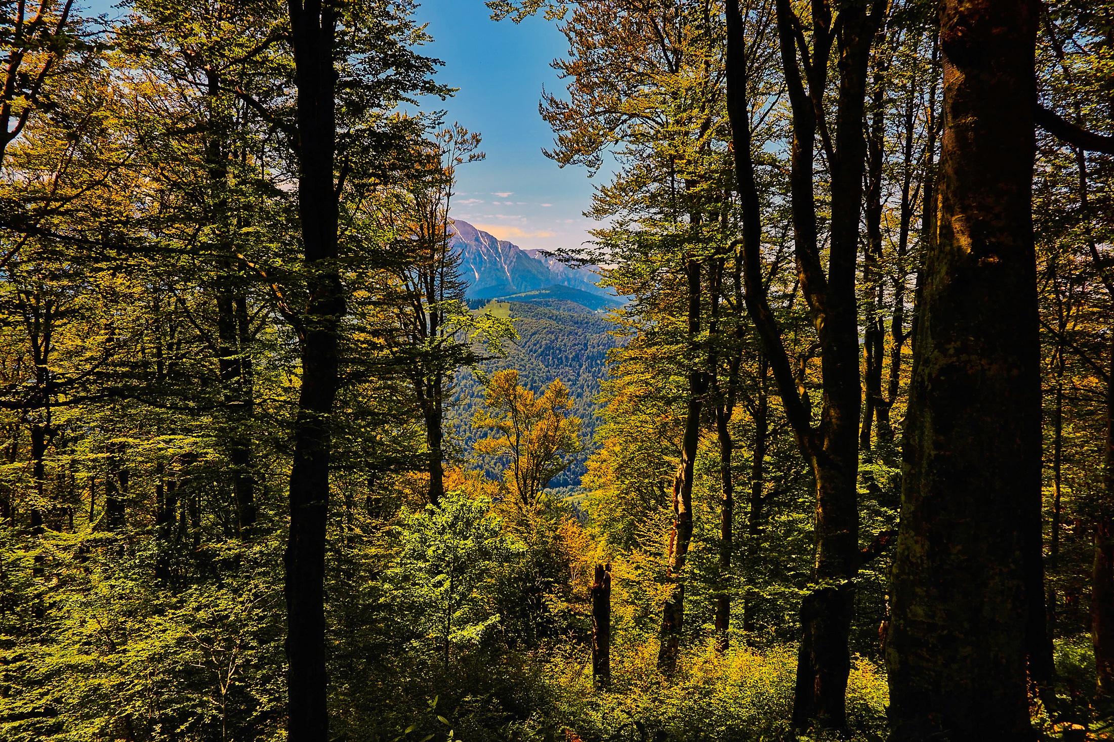 Poze Peisaj Copac Natură Pustie Ramură Lumina