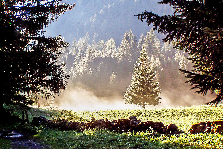kostenlose foto landschaft baum natur wald wildnis berg tau nebel wandern sonnenlicht. Black Bedroom Furniture Sets. Home Design Ideas