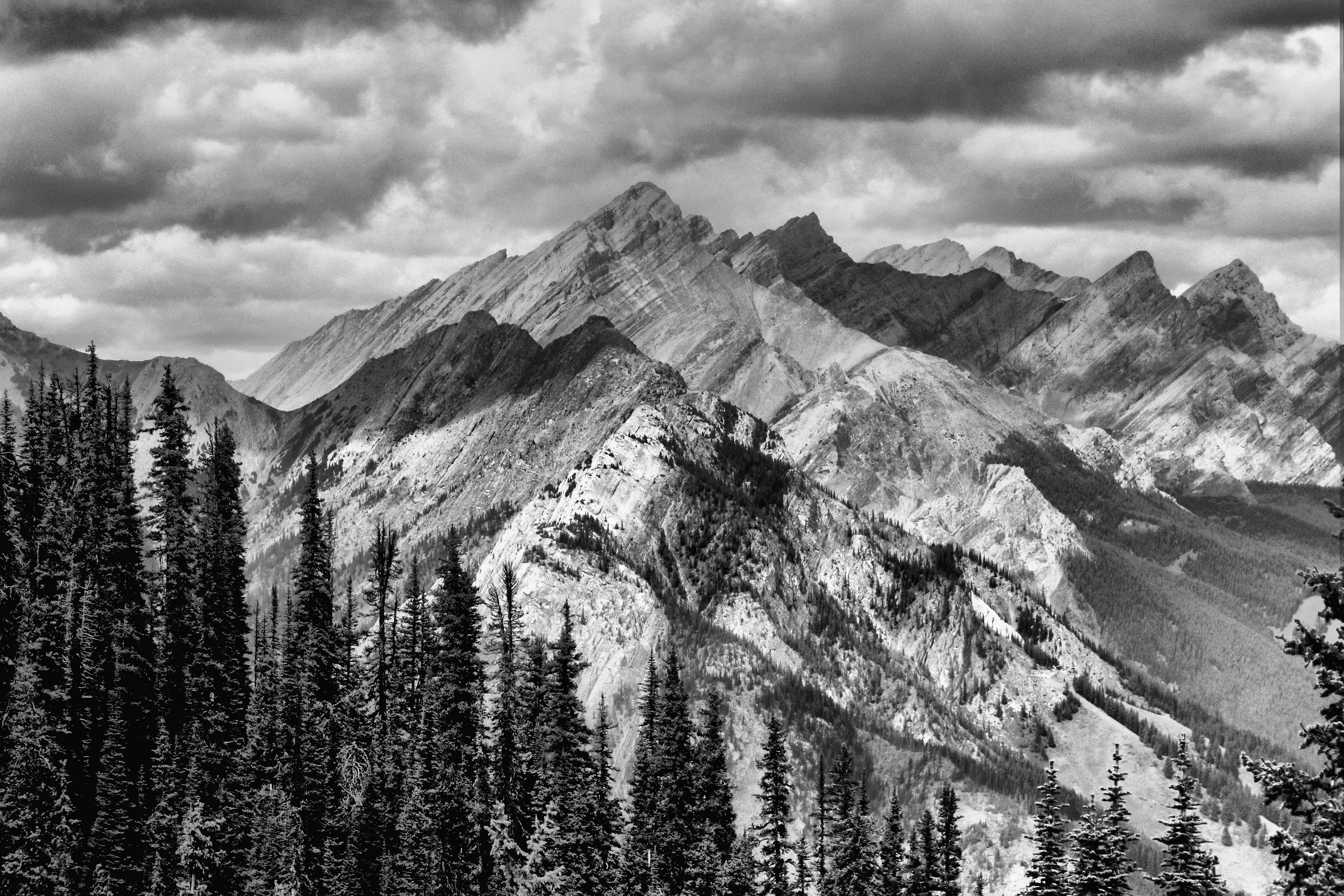 Fotos gratis : paisaje, árbol, naturaleza, bosque ...