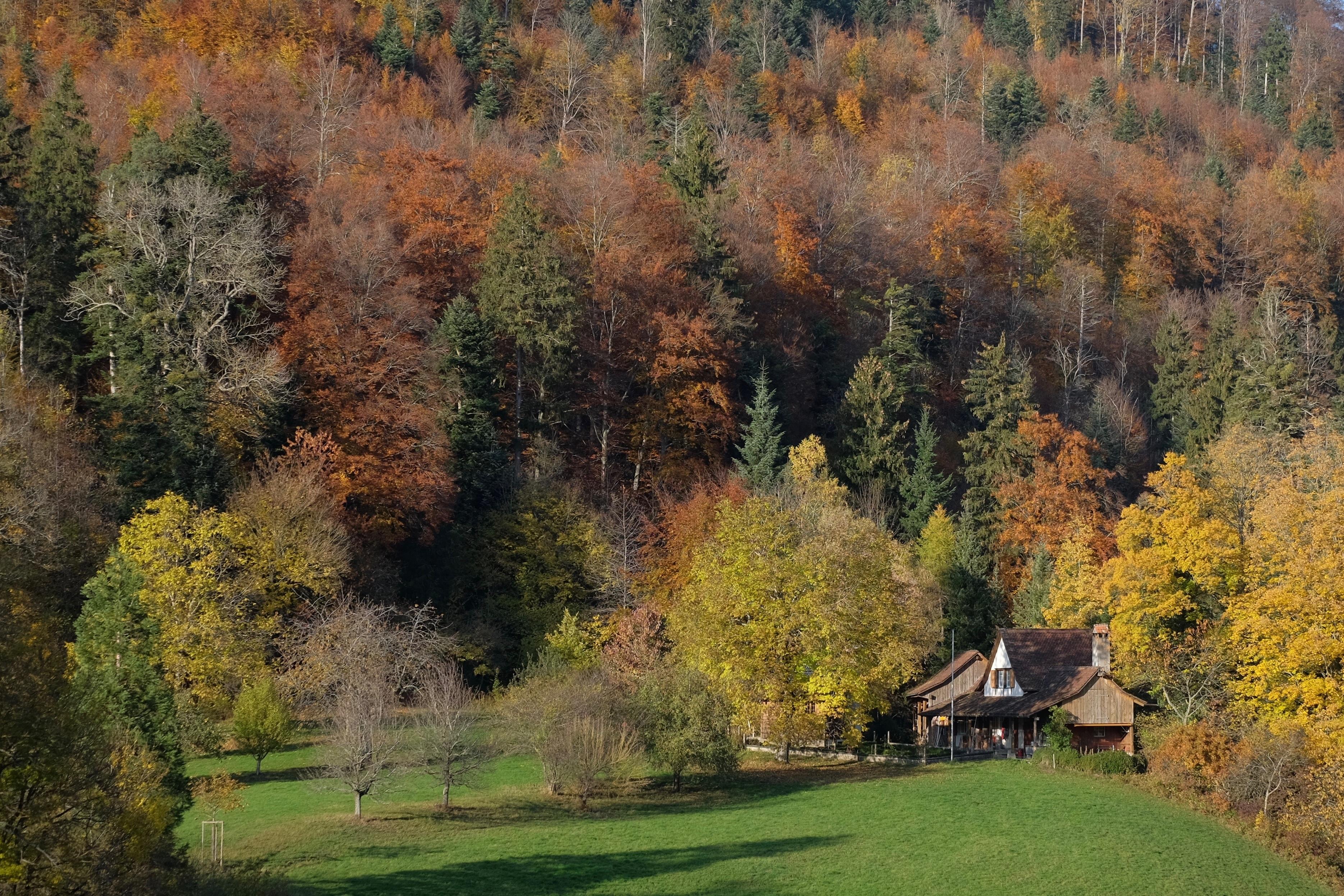 течение картинки лес природа осень деревня второе предлагаются горячие