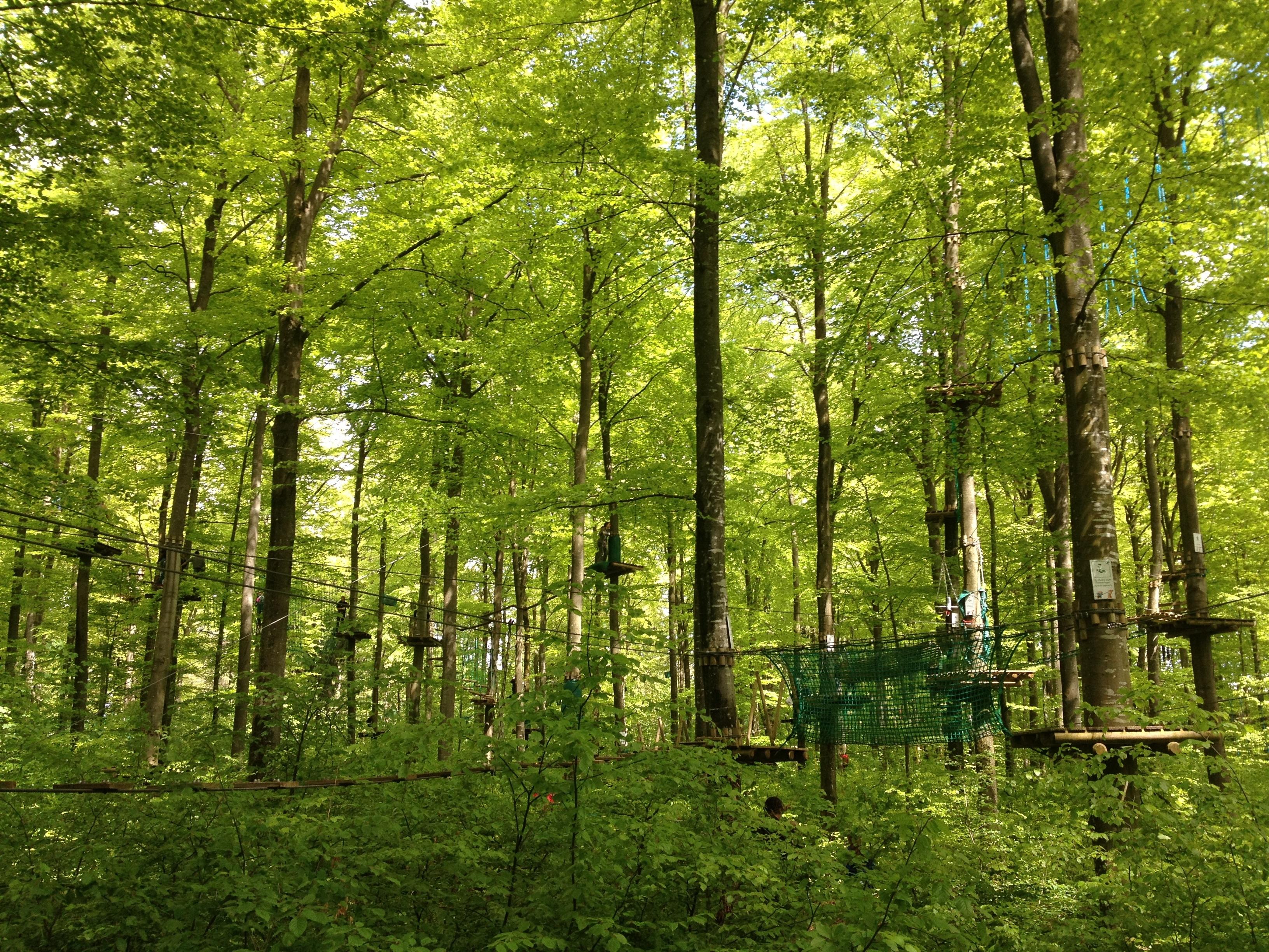 взносы лиственный лес картинки для презентации подчеркнула, что