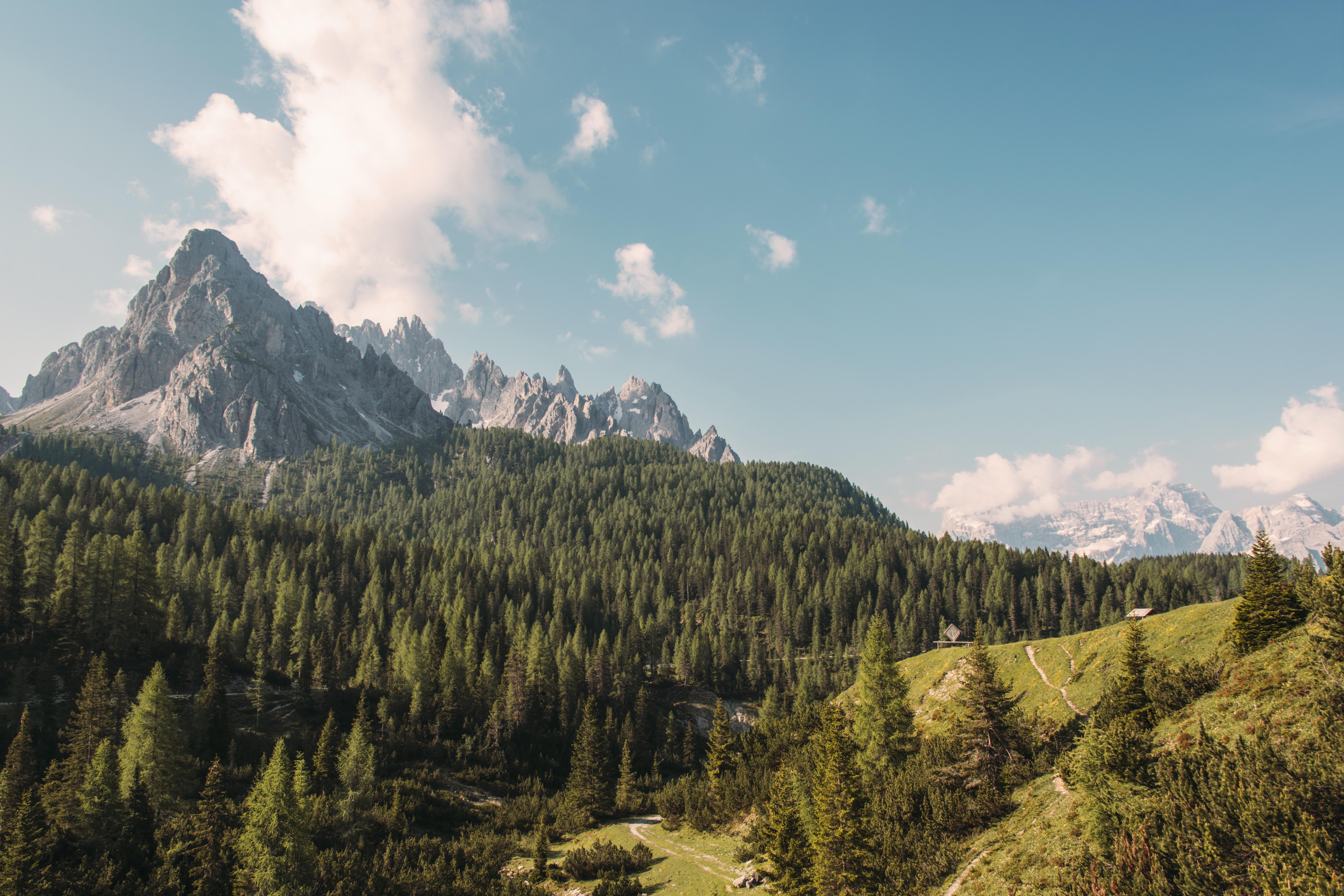 природа лес деревья ели гора облака небо  № 2757498  скачать