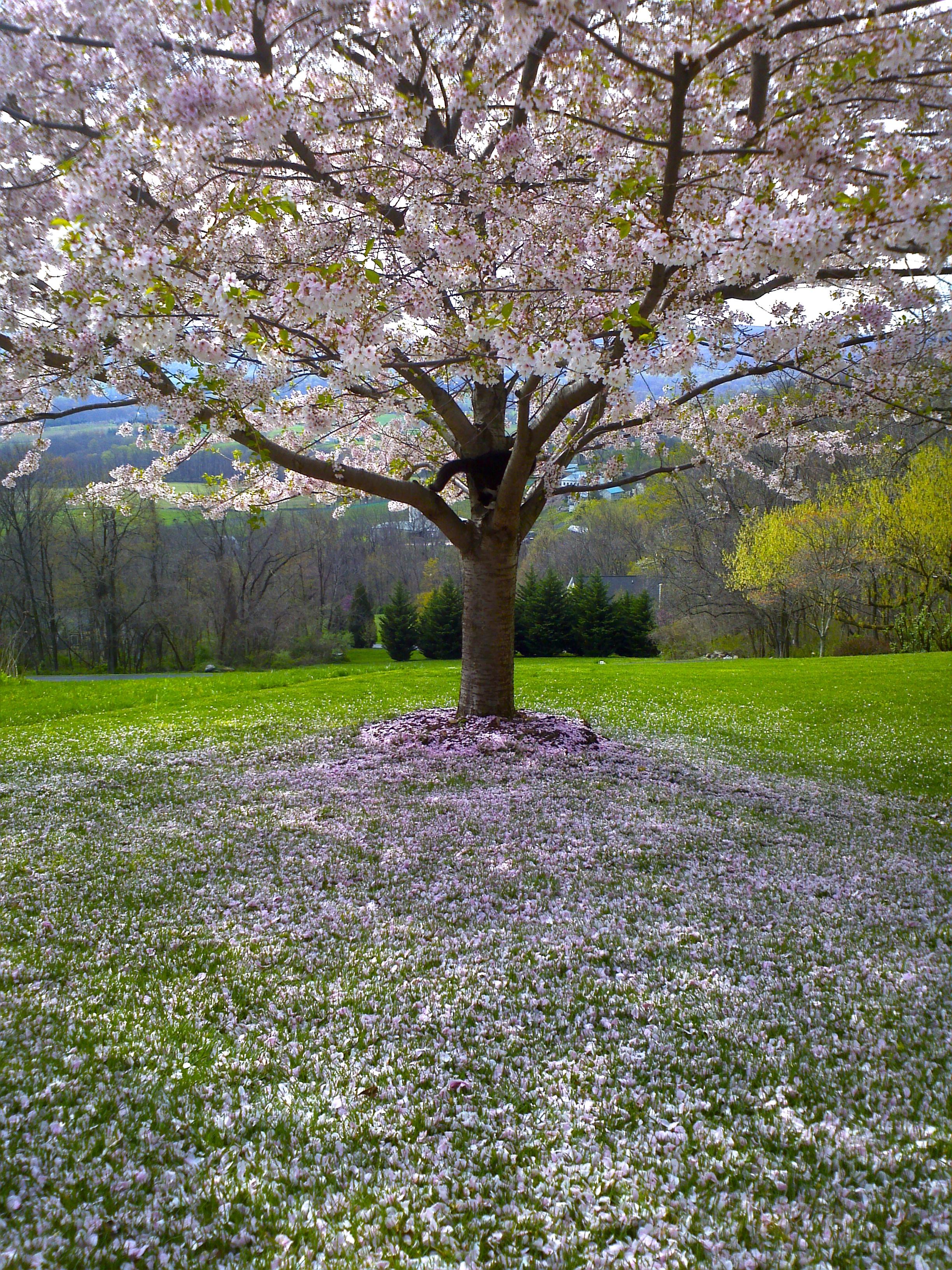 красивые весенние сады картинки кто задается