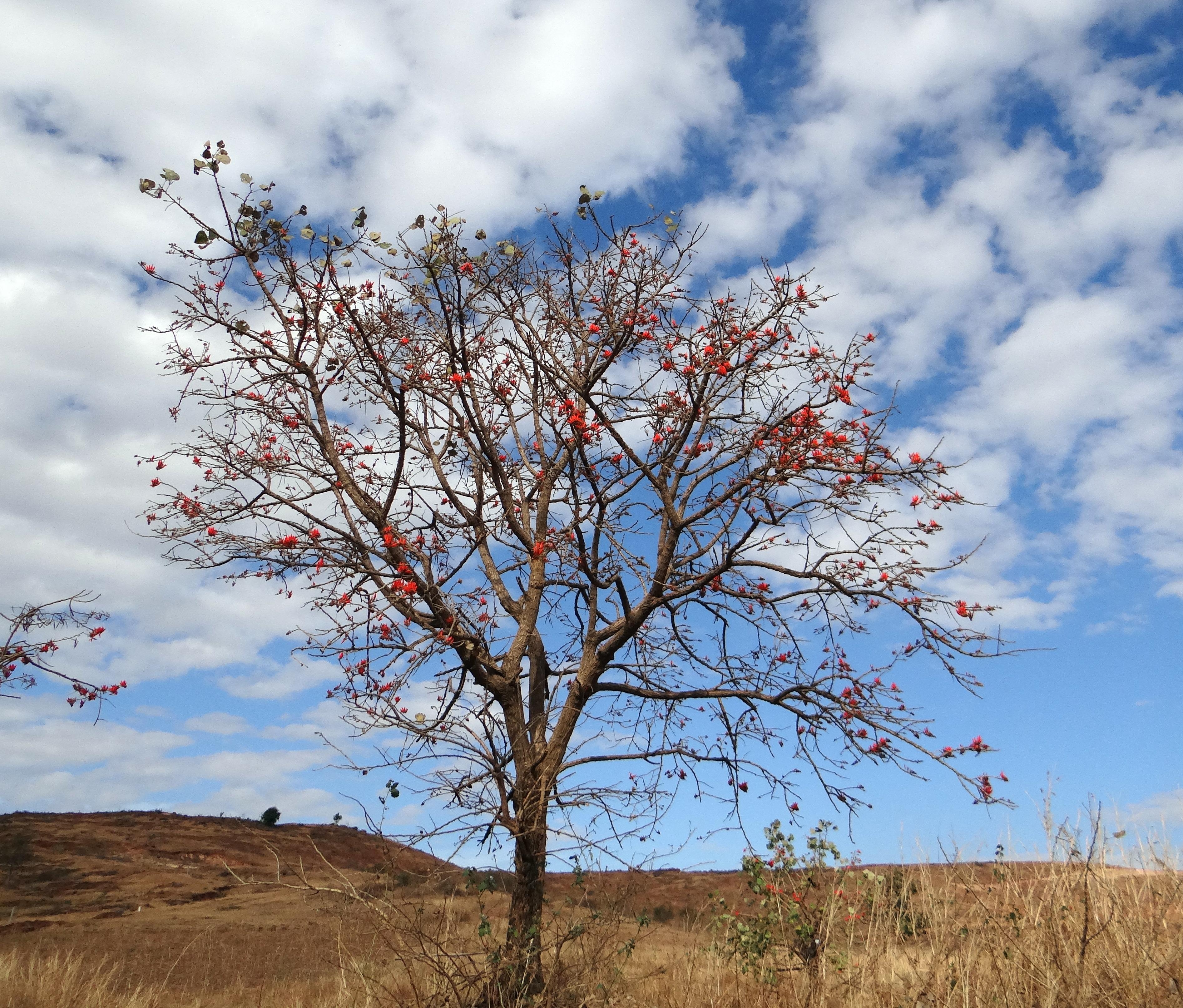 Free Images : Landscape, Nature, Grass, Branch, Blossom