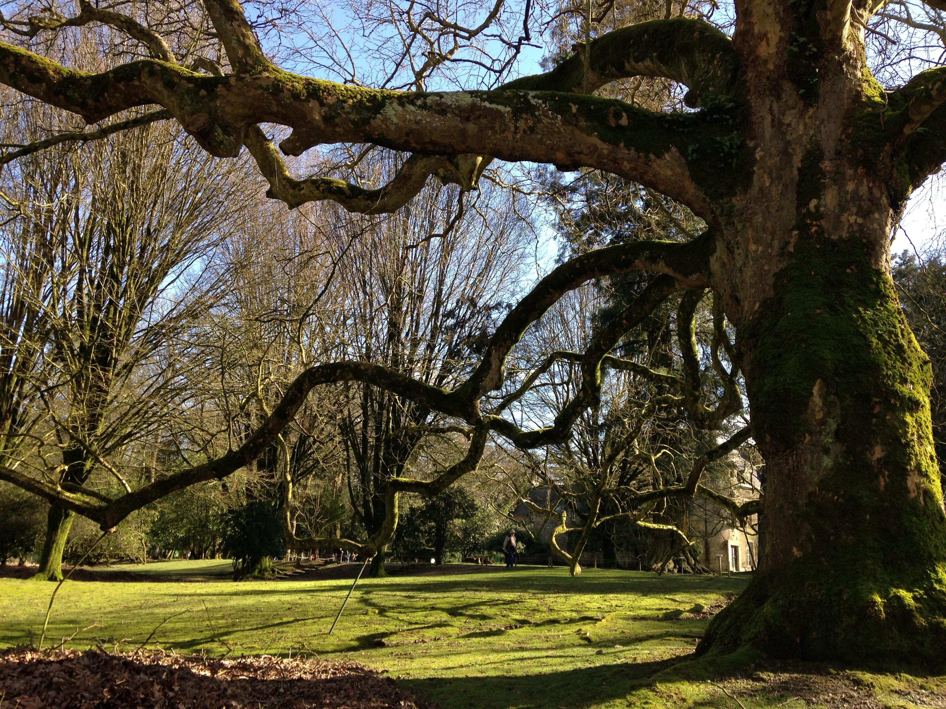 натяжные картинки старинных деревьев установка