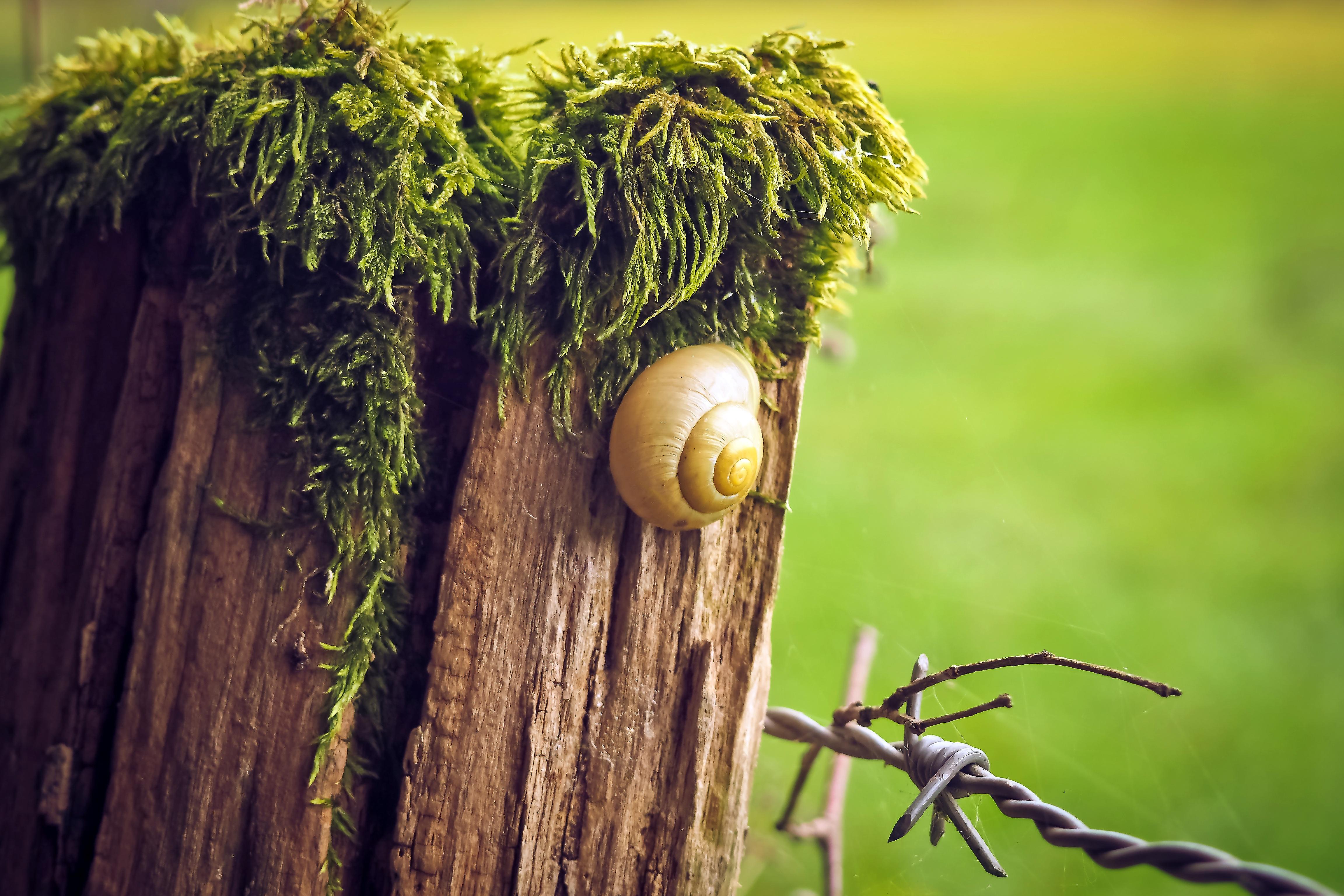 Kostenlose foto : Landschaft, Baum, Natur, Gras, Ast, Zaun ...