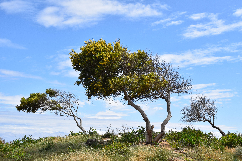 images gratuites paysage arbre la nature herbe branche plante ciel dune flore savane. Black Bedroom Furniture Sets. Home Design Ideas