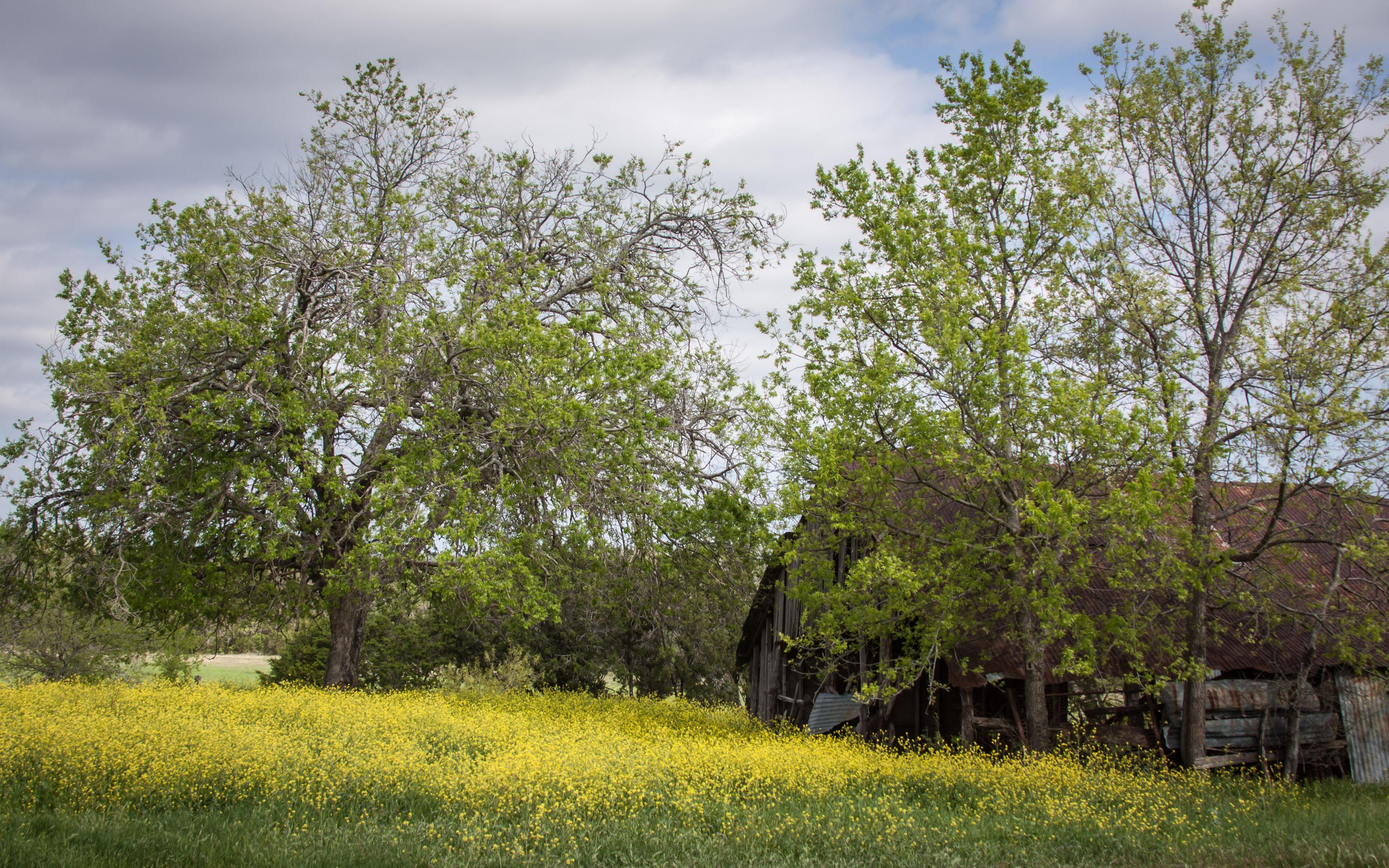 Free Images Landscape Tree Branch Sky Field Meadow