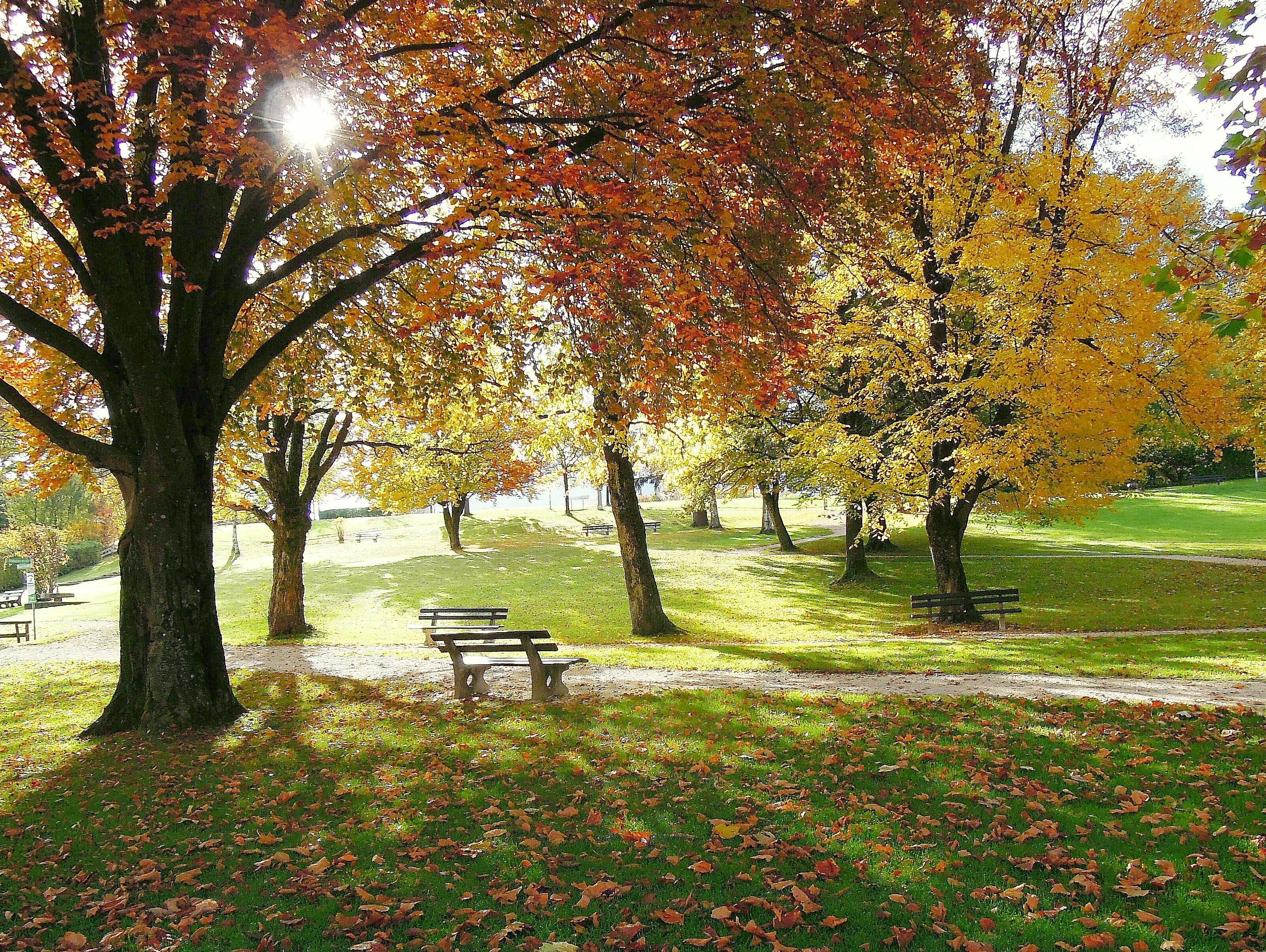 free images landscape nature grass branch sky lawn