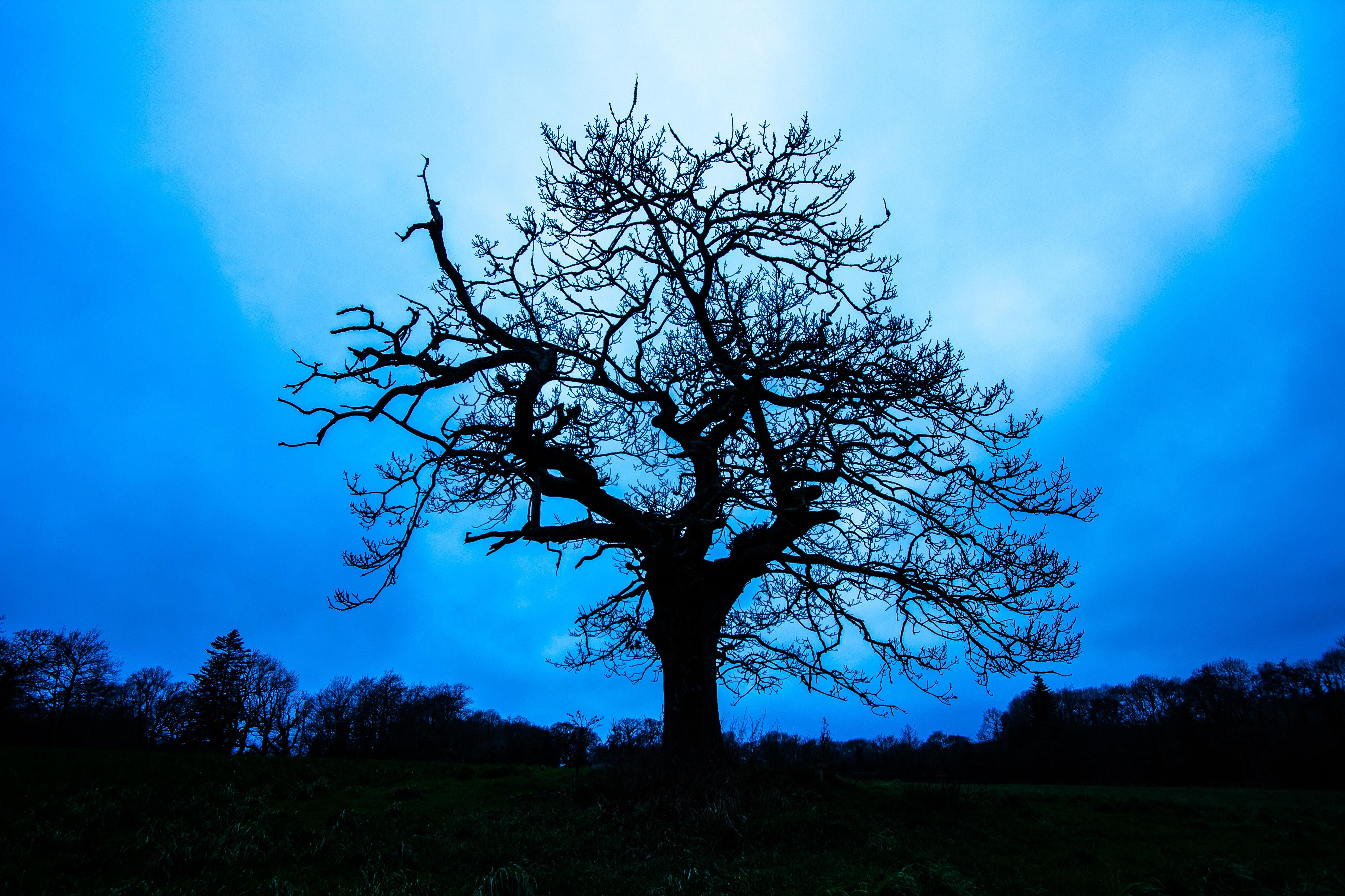 Gambar Pemandangan Pohon Alam Rumput Cabang Bayangan