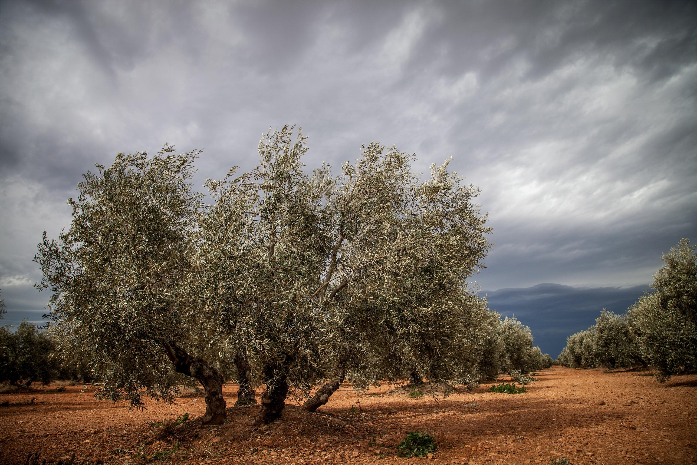 From Bullfights to Orange Trees: Drama & Romance in Ronda Trees in spain photos