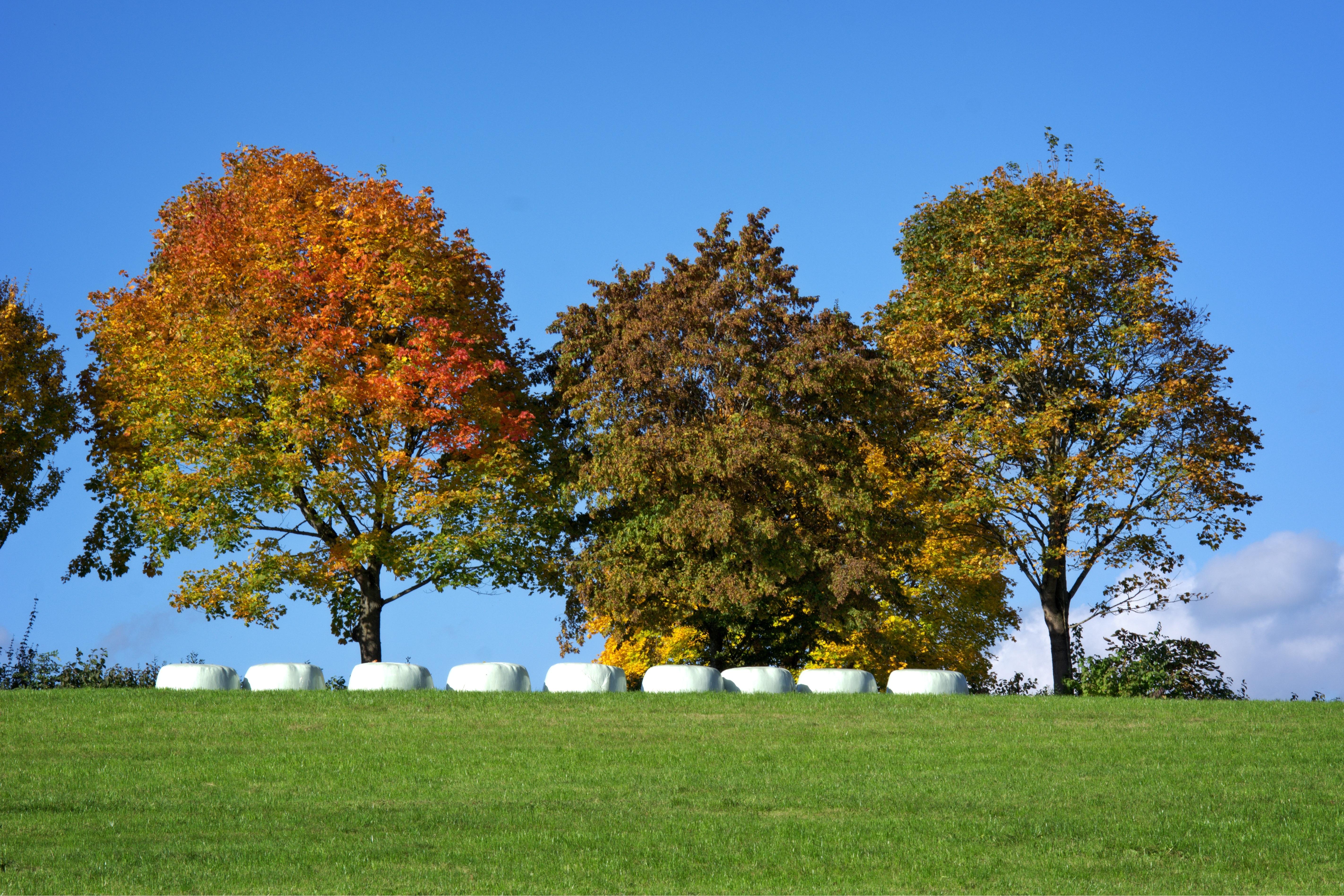 Kostenlose foto : Landschaft, Baum, Natur, Gras, Gruppe, Himmel ...