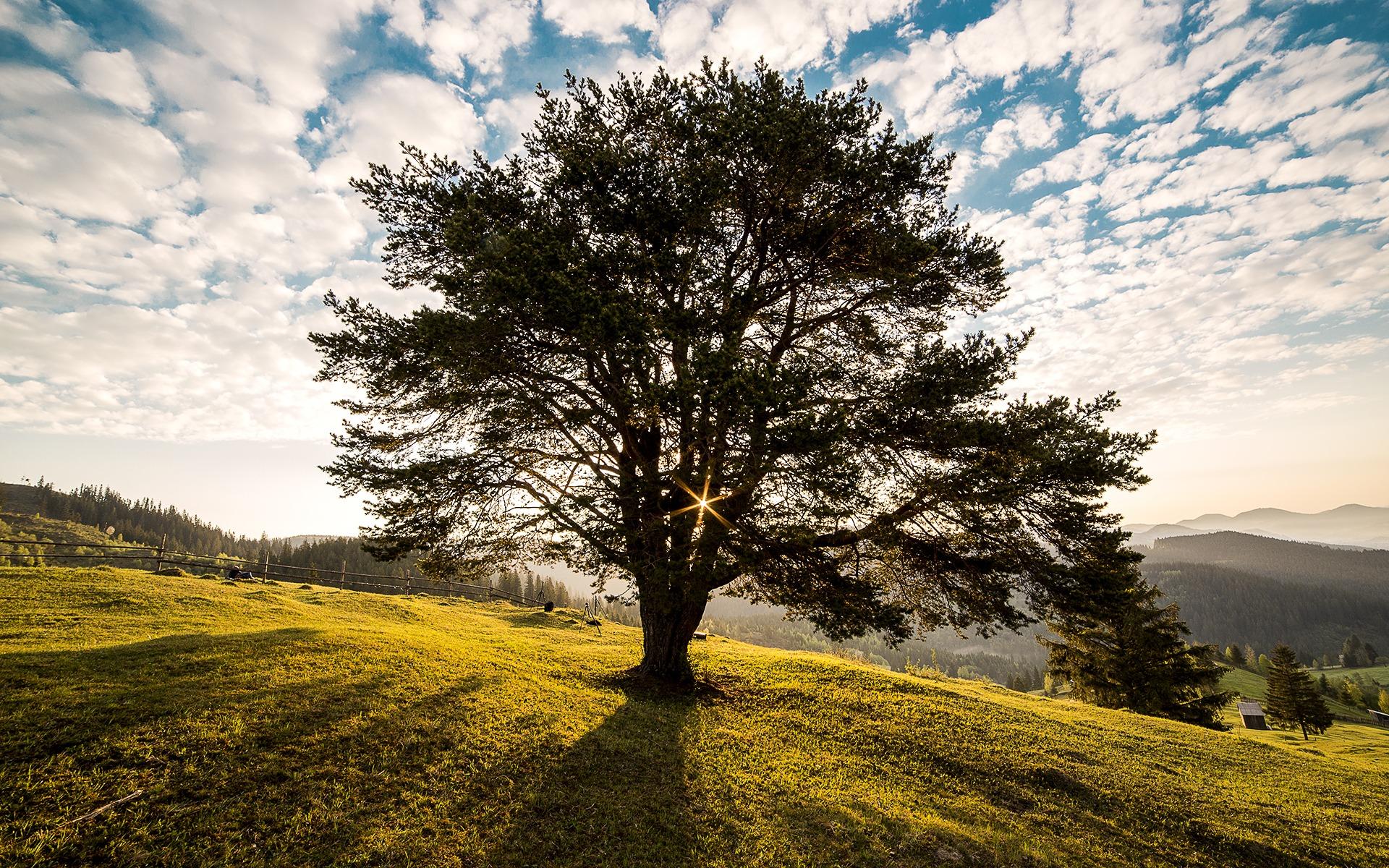 картинки пейзаж деревья