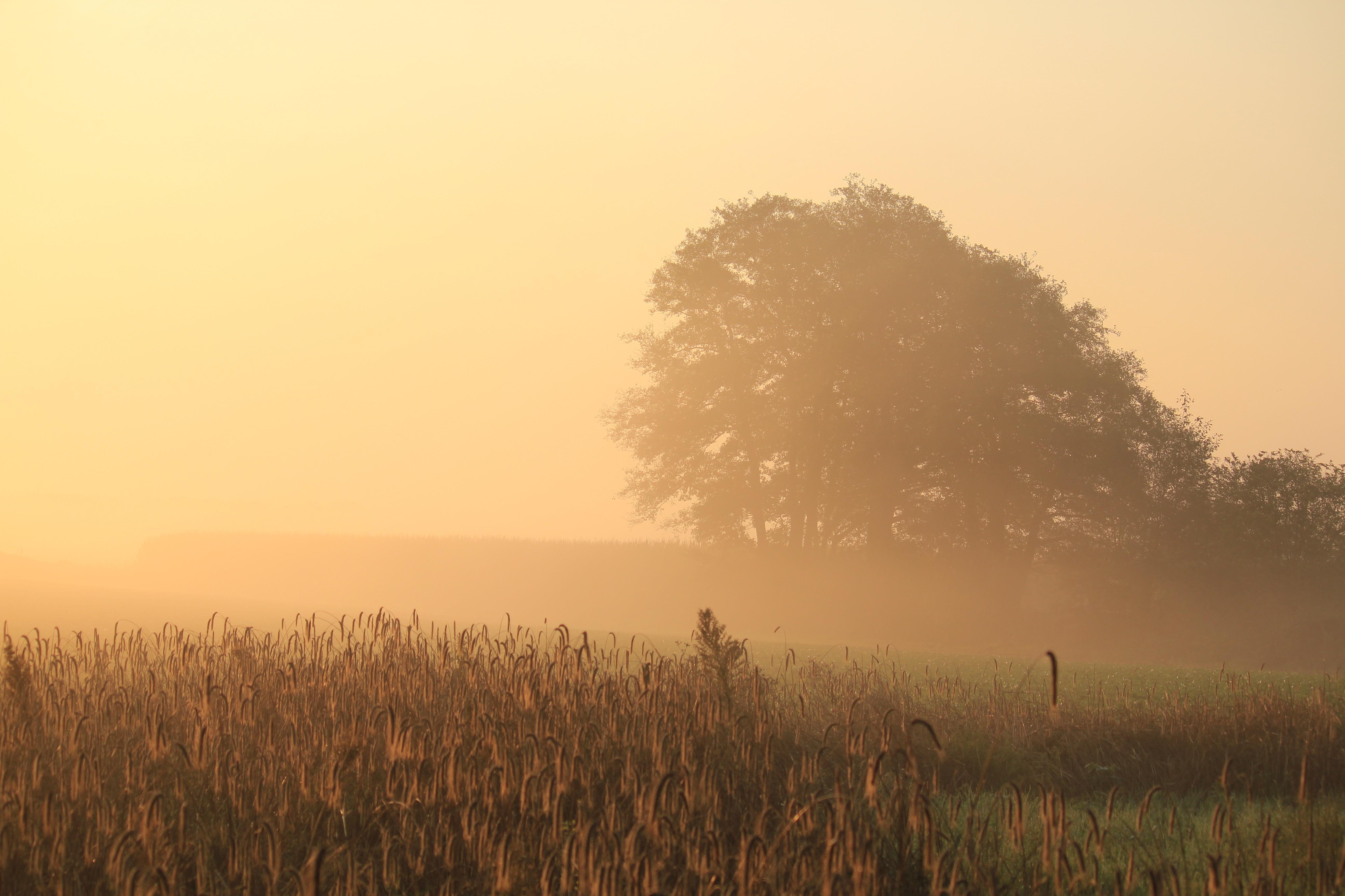 free images   landscape  tree  nature  horizon  dew  cloud