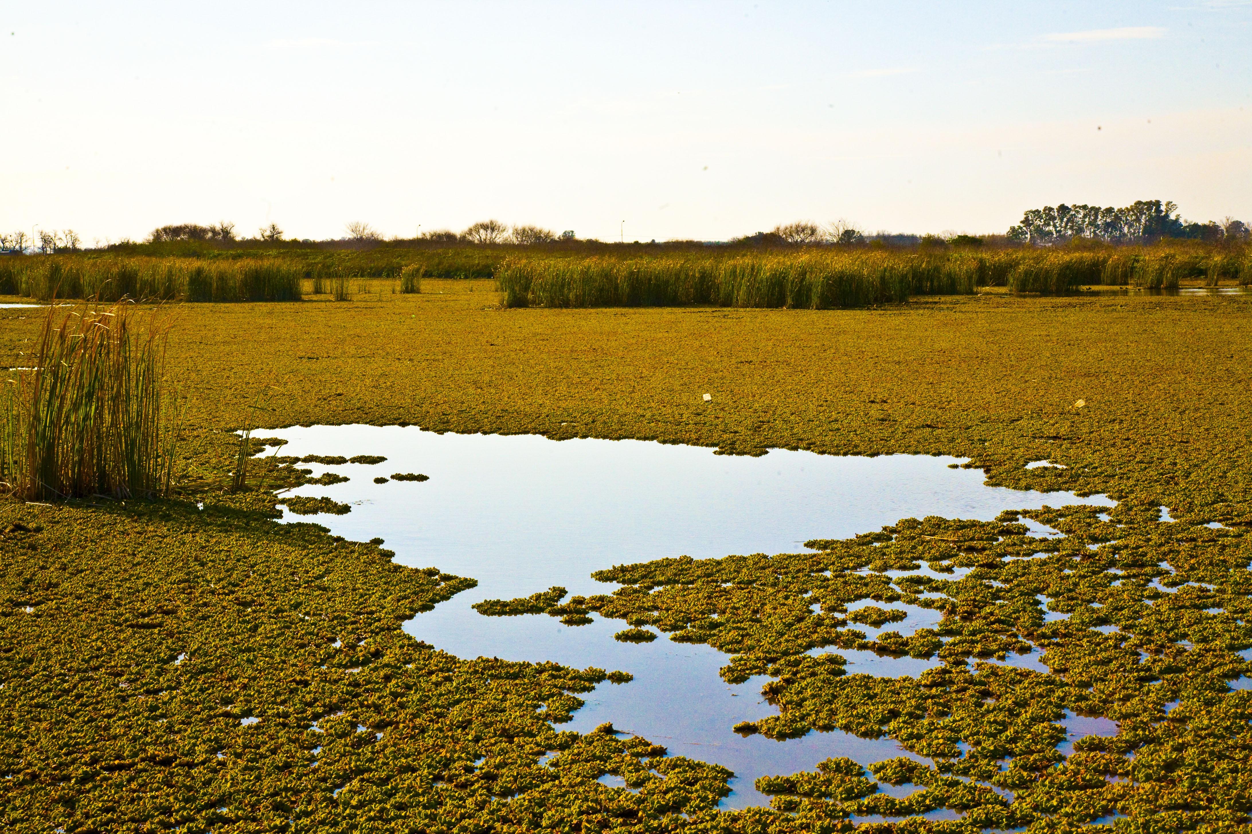 free images landscape tree nature horizon swamp