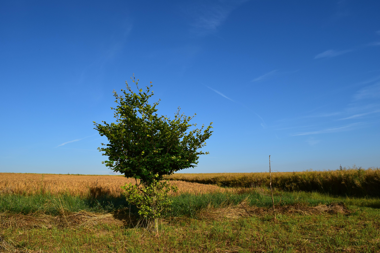 деревья в степи фото и названия выводят там детенышей