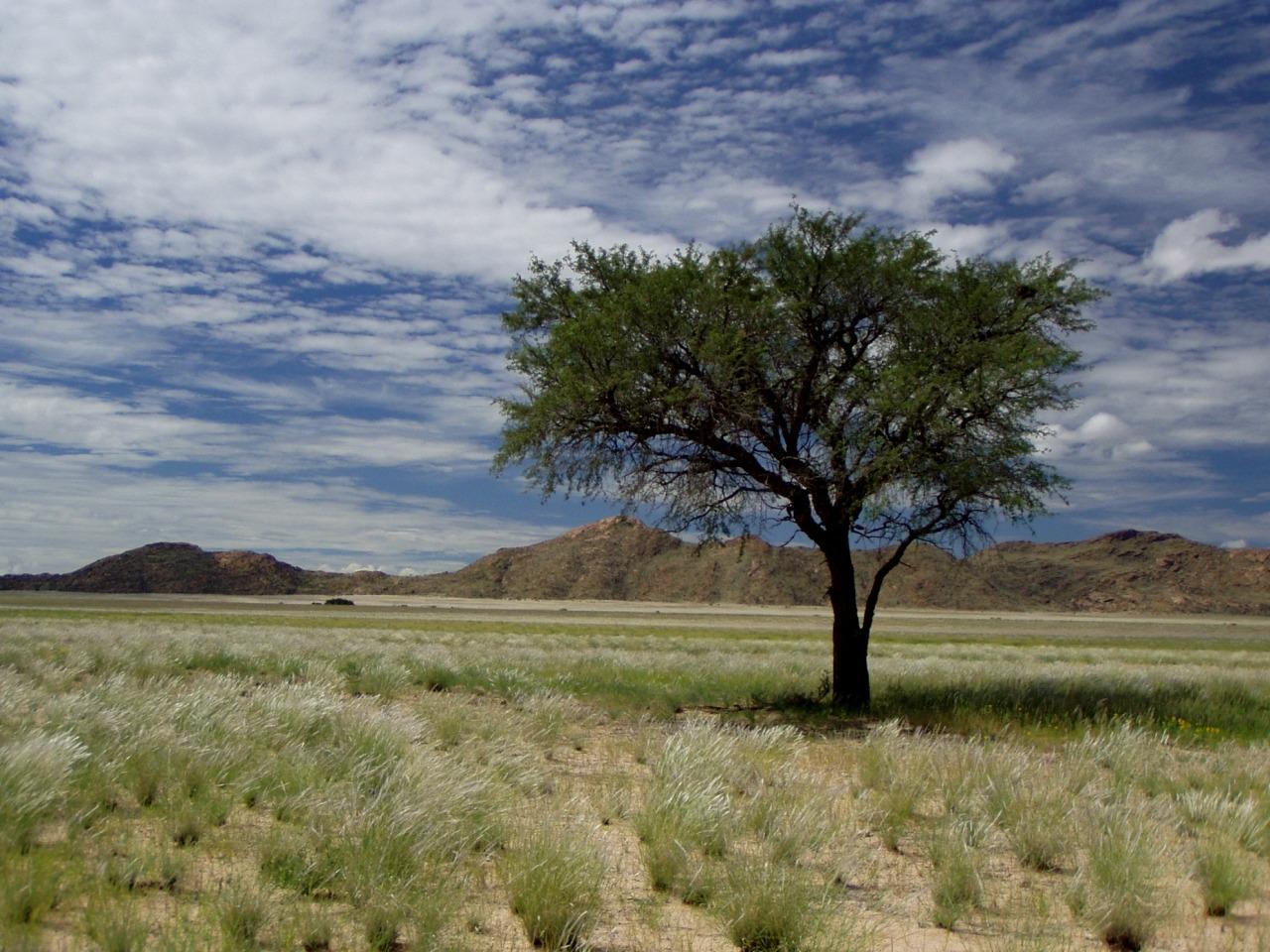 images gratuites paysage arbre la nature herbe horizon le marais r gion sauvage nuage. Black Bedroom Furniture Sets. Home Design Ideas