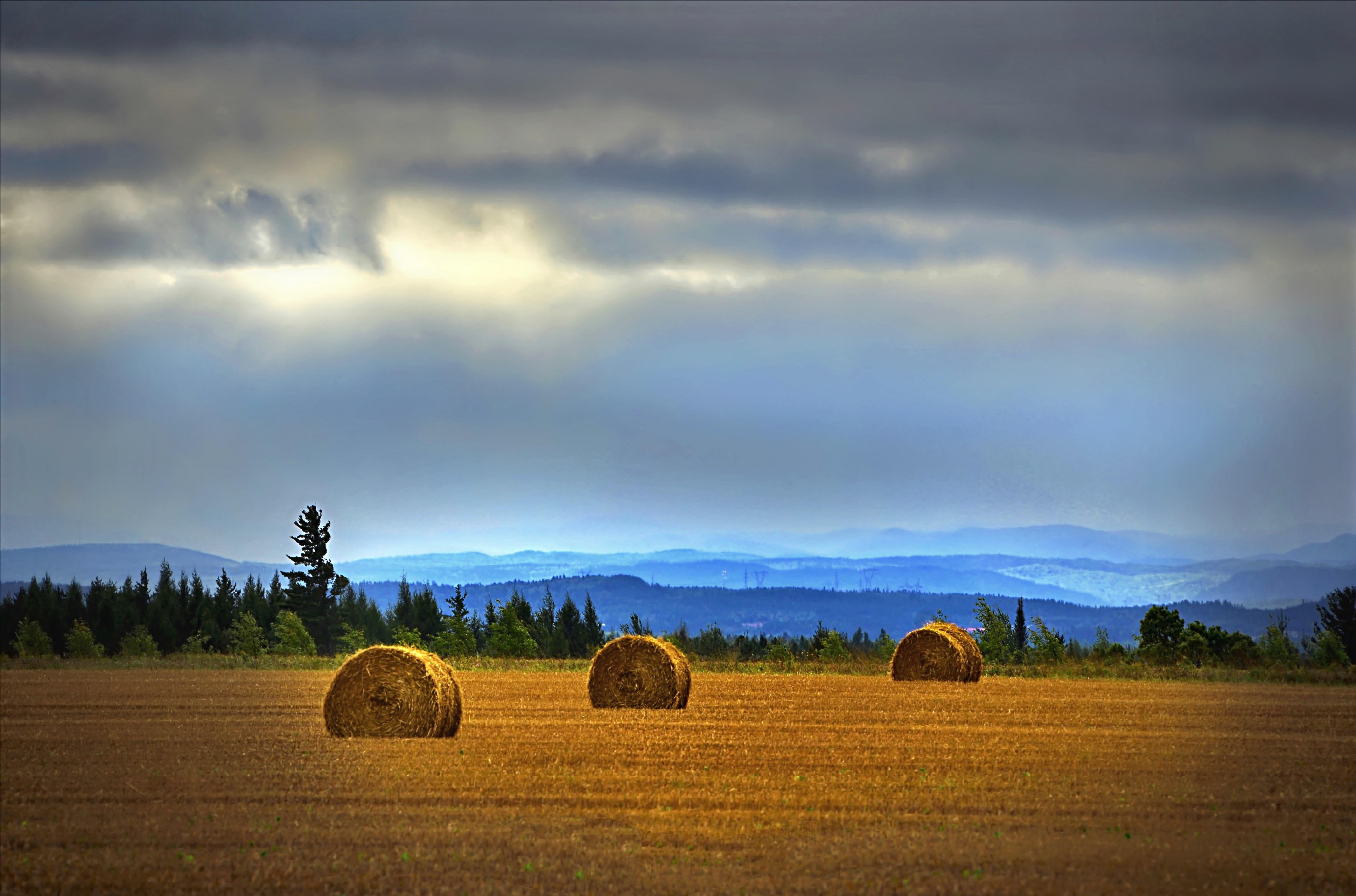 Free Images : landscape, tree, nature, grass, horizon ...