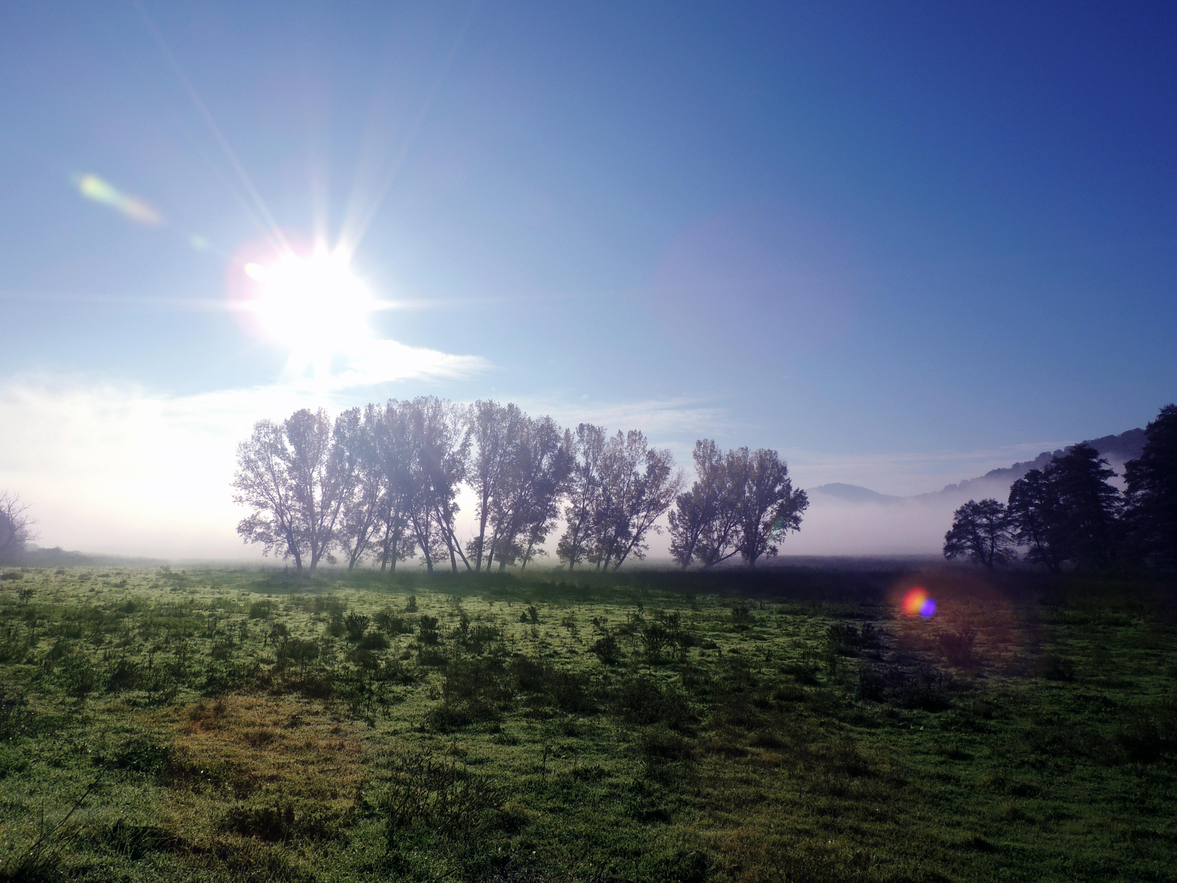 c2b0565f301a4 Free Images : landscape, tree, nature, grass, horizon, light, cloud, sky,  sun, sunrise, sunset, mist, field, meadow, sunlight, morning, hill, dawn,  ...
