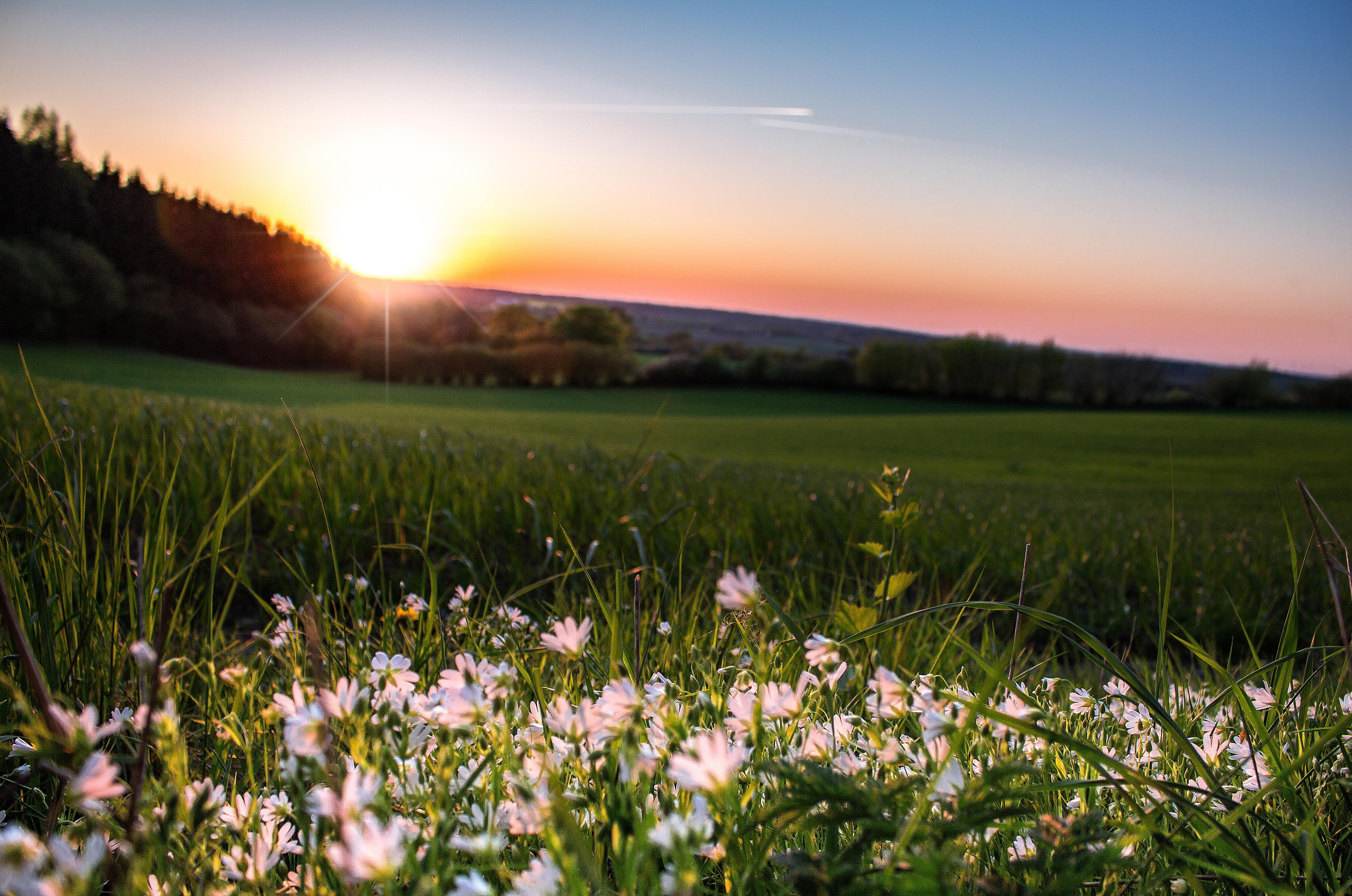 официальной странице красивые фото цветочных полей на рассвете любые фотографий как