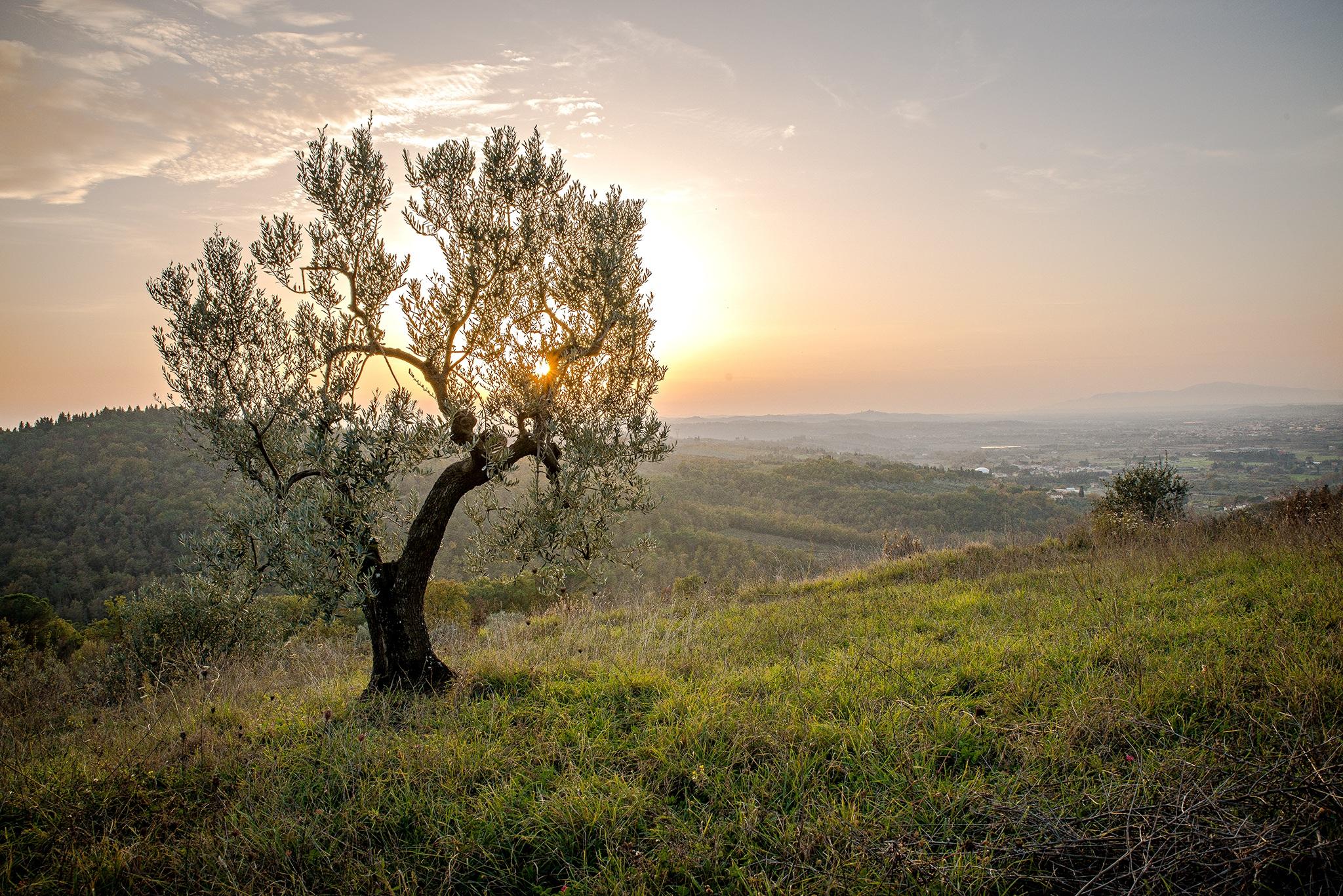 Free Images : landscape, tree, nature, grass, horizon, wilderness ...