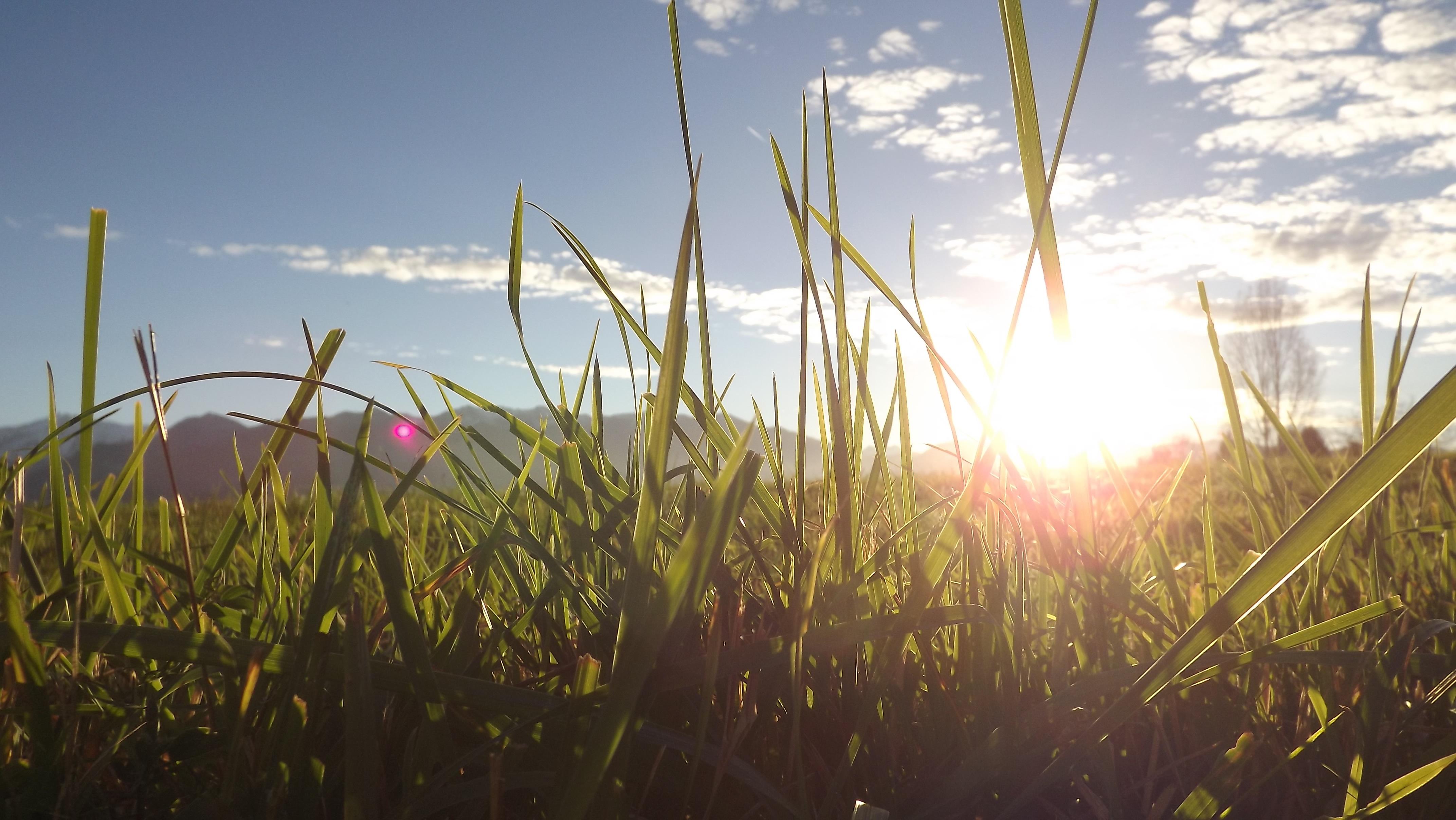 картинка утро трава природа сквере напротив