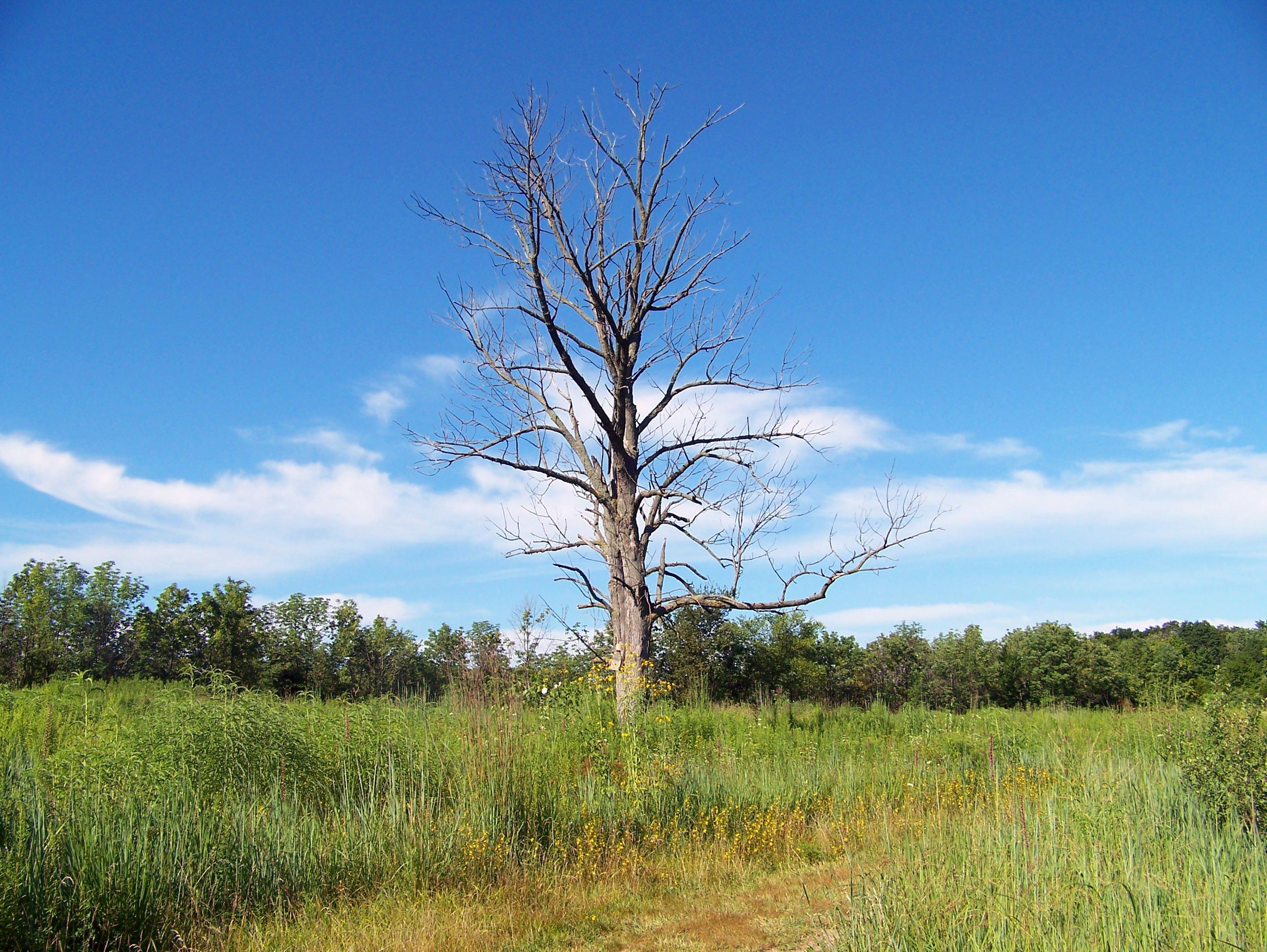 Fotos gratis paisaje rbol naturaleza c sped pantano for Arboles para plantar en verano
