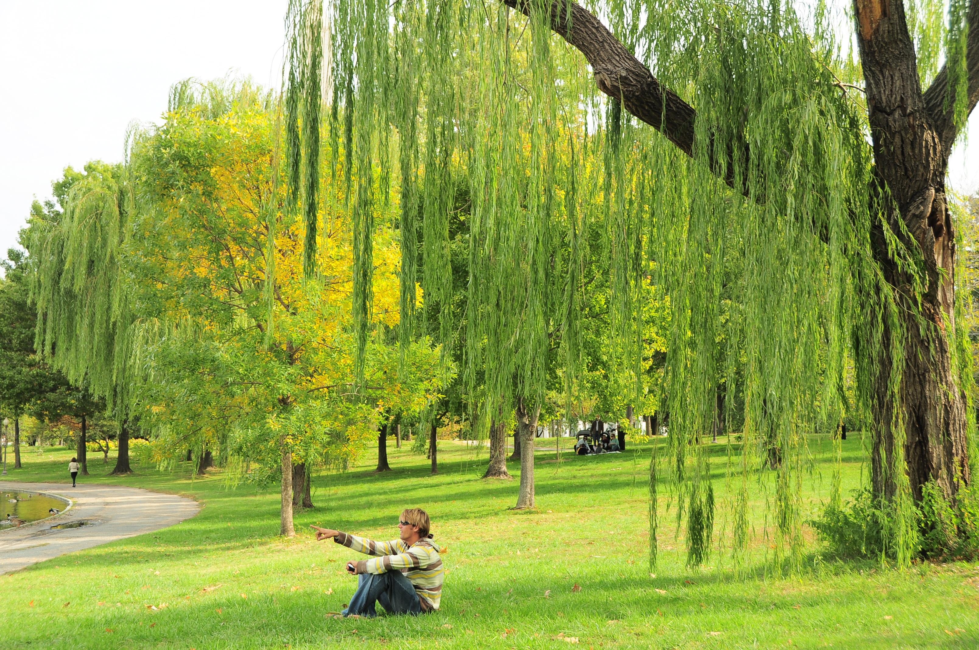 Bois de saule synonyme for Plante synonyme