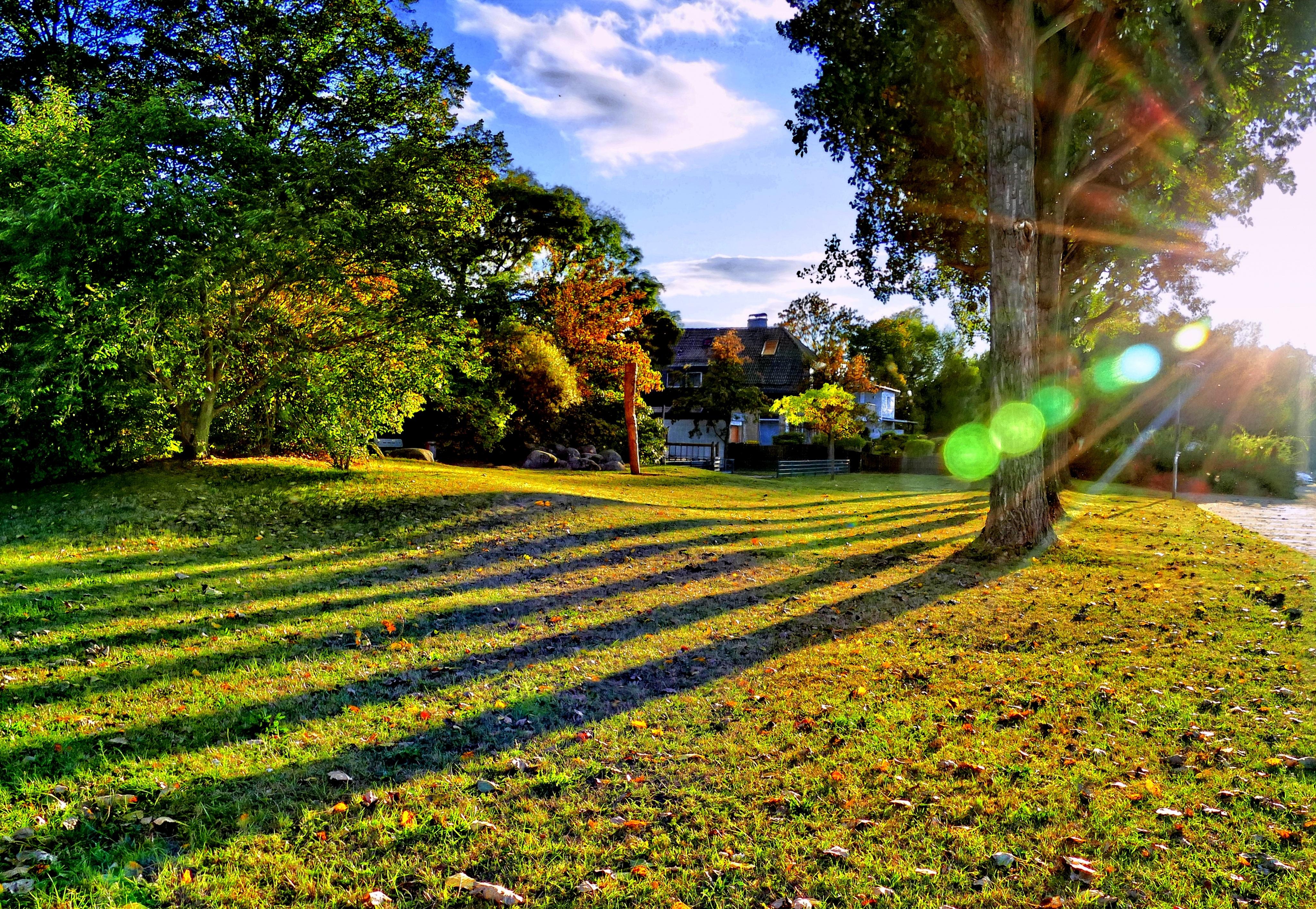 Fotos gratis paisaje rbol naturaleza c sped planta for Arboles jardin sombra