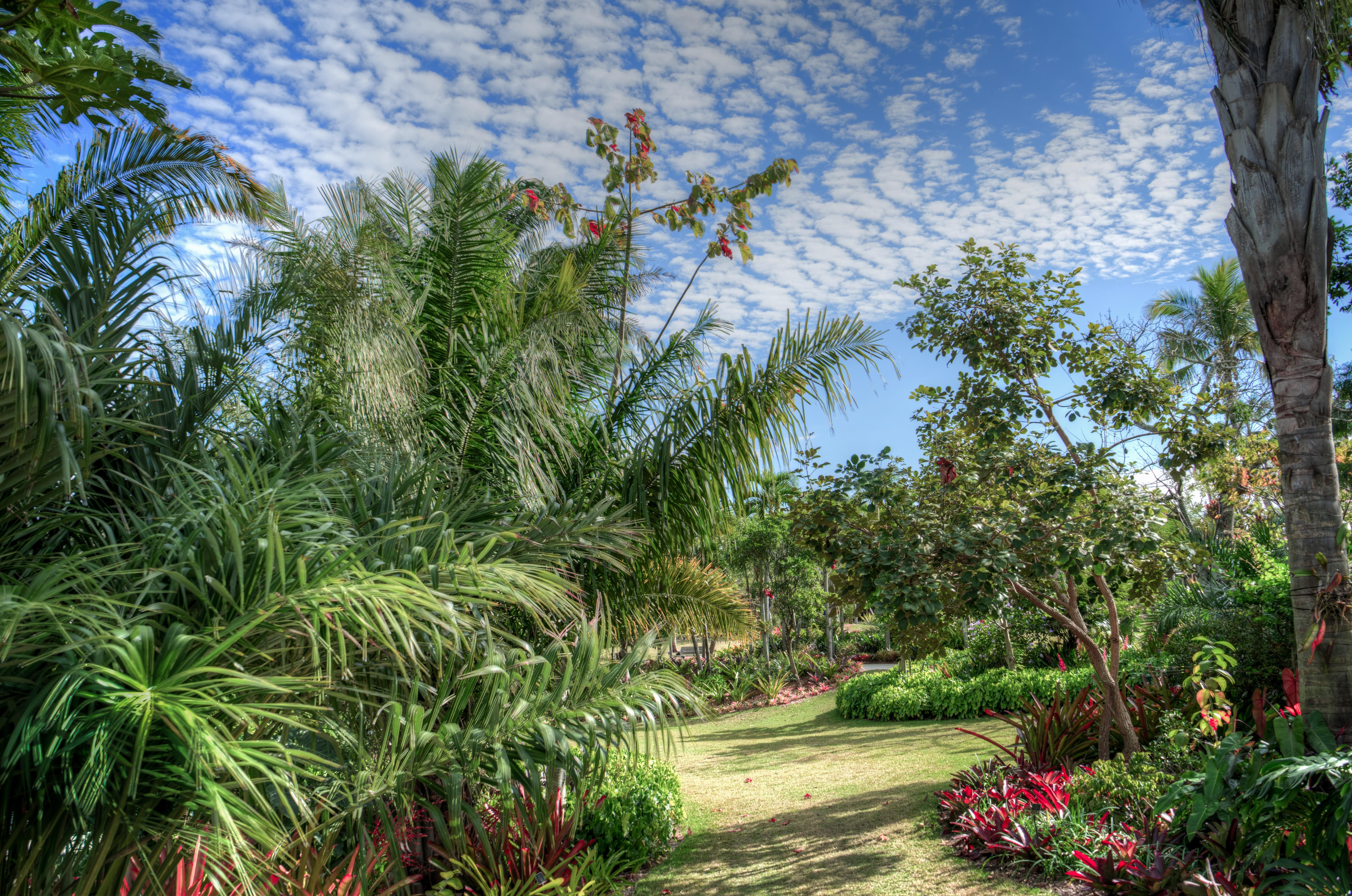 Kostenlose foto landschaft baum natur gras blume for Arreglar jardin abandonado