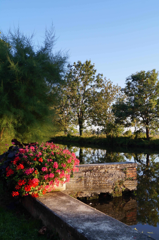 kostenlose foto landschaft baum natur gras blatt blume stadt fluss sommer abend grn herbst hinterhof waschen botanik garten tourismus - Hinterhof Landschaften Bilder