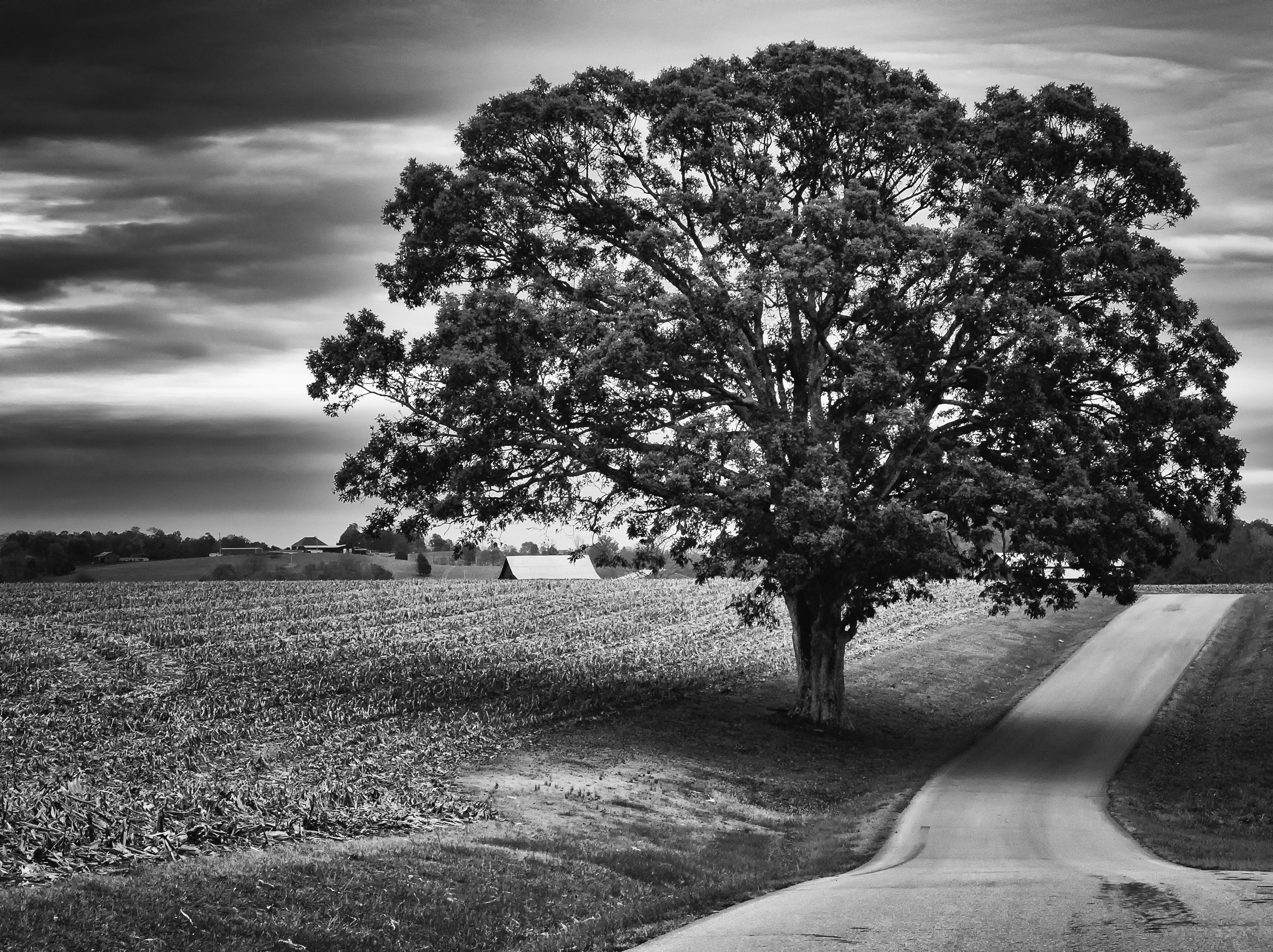 Gambar Pemandangan Pohon Alam Rumput Batu Horison Awan