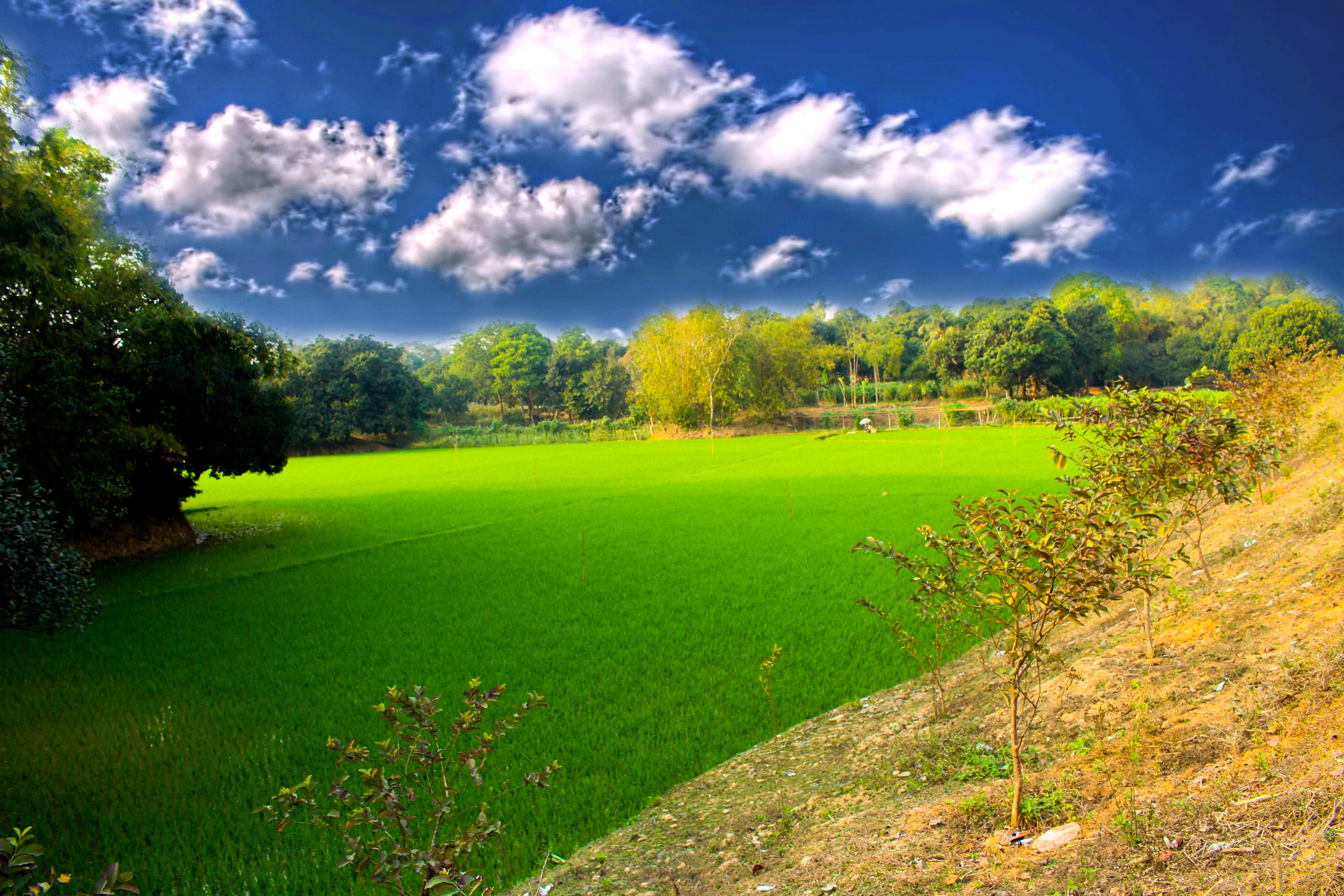 Gambar Pemandangan Pohon Alam Langit Bidang Halaman Rumput