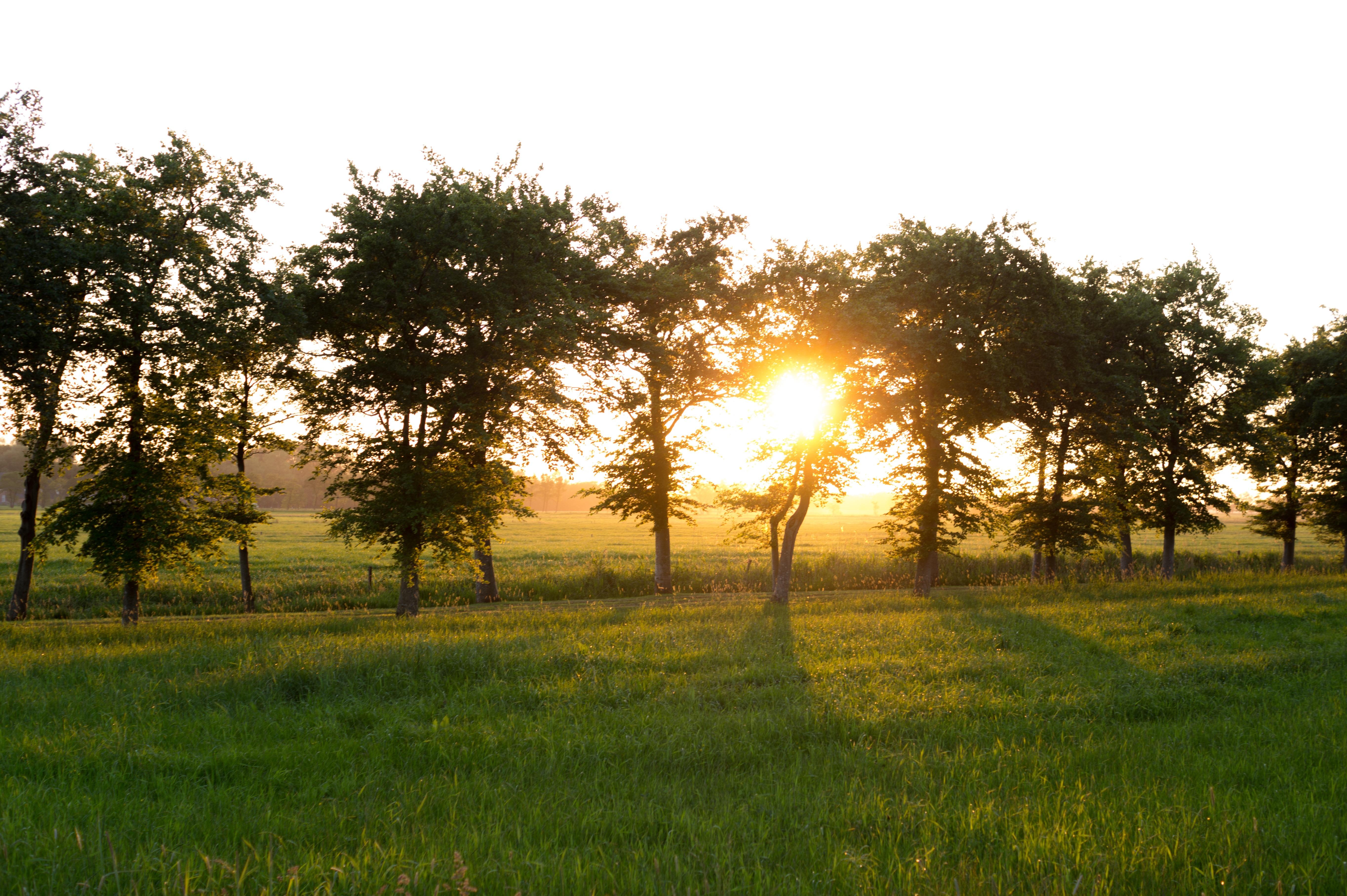 Gambar Pemandangan Pohon Alam Langit Sinar Matahari