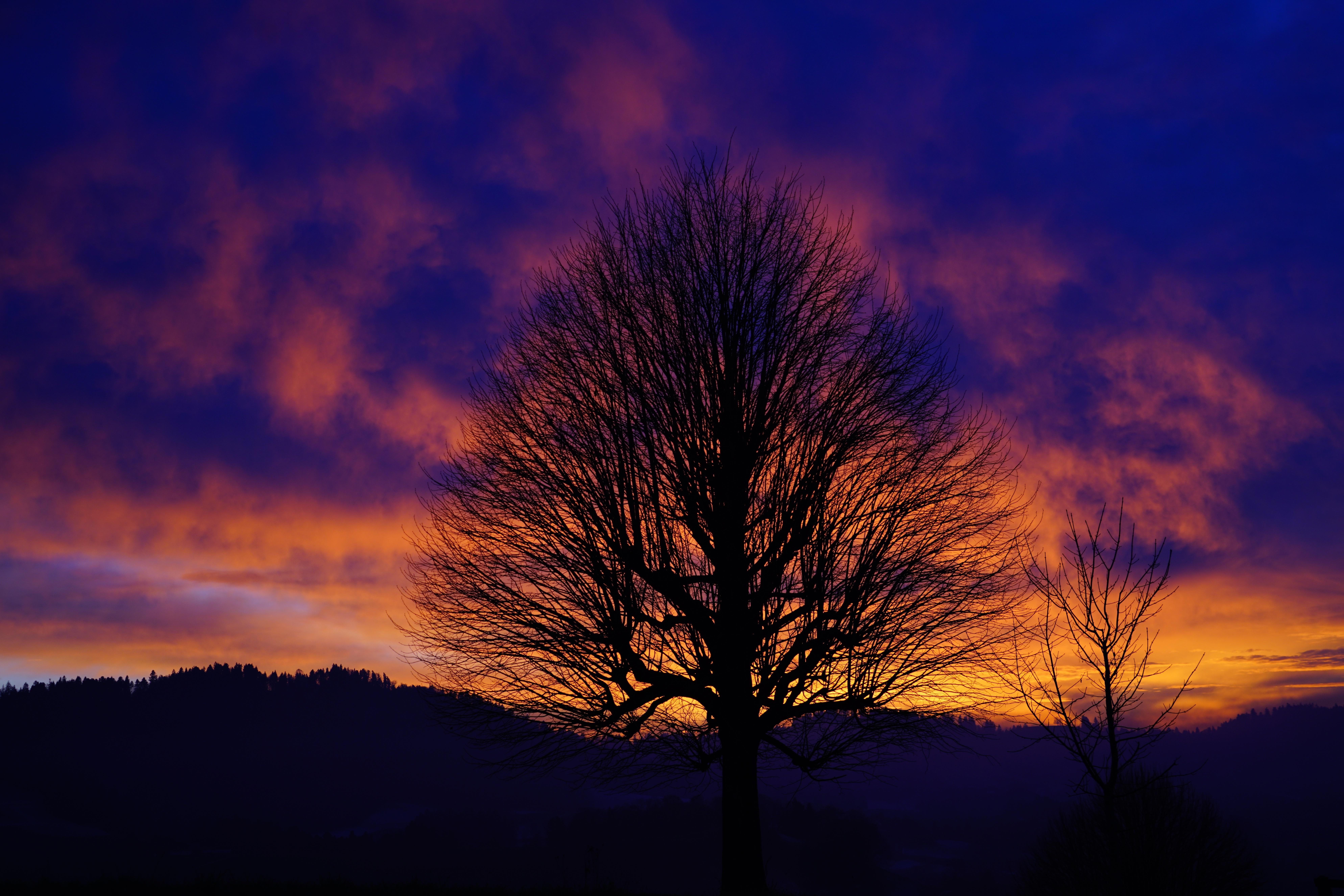 Free Landscape Nature Horizon Branch Silhouette