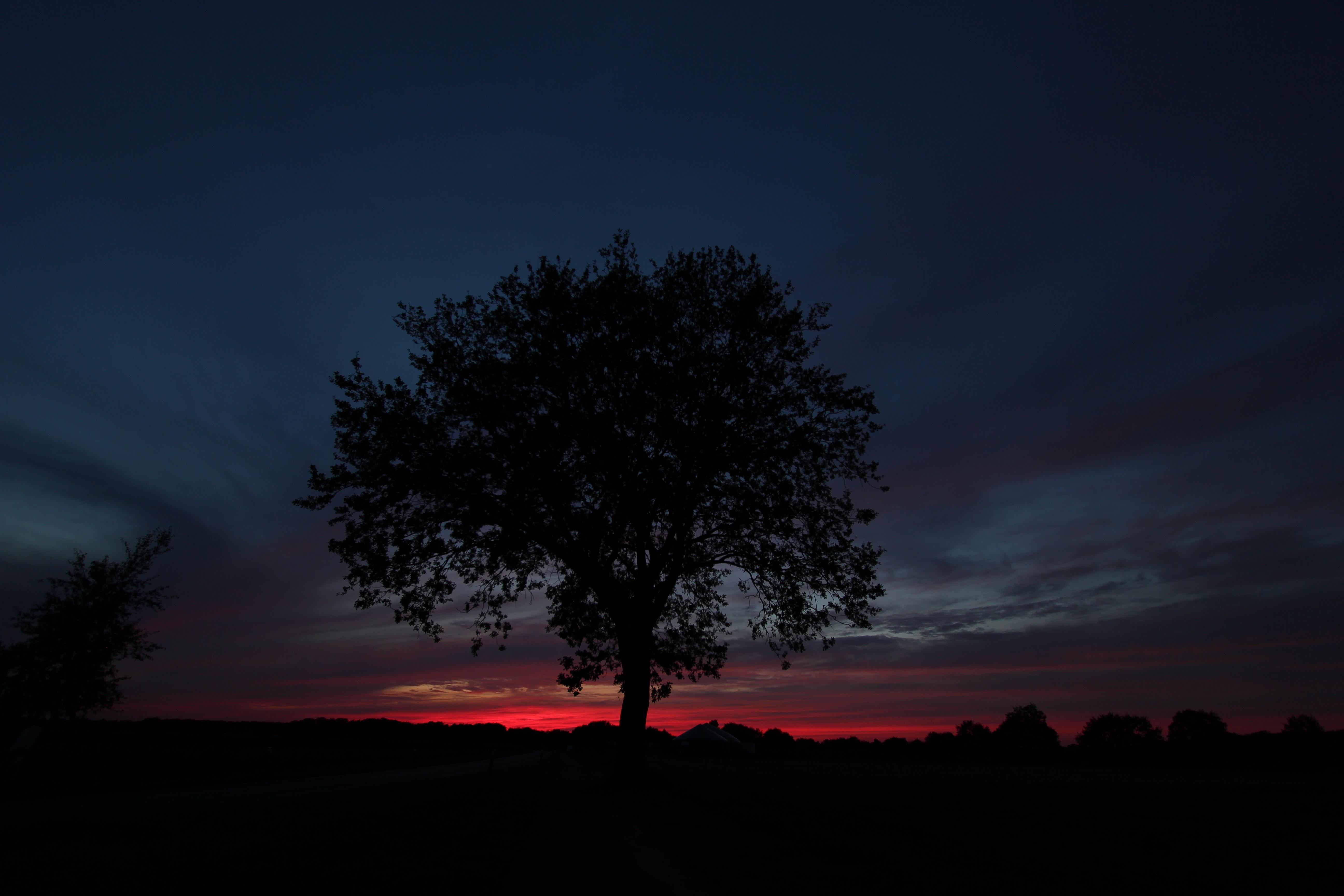 картинки деревьев ночью