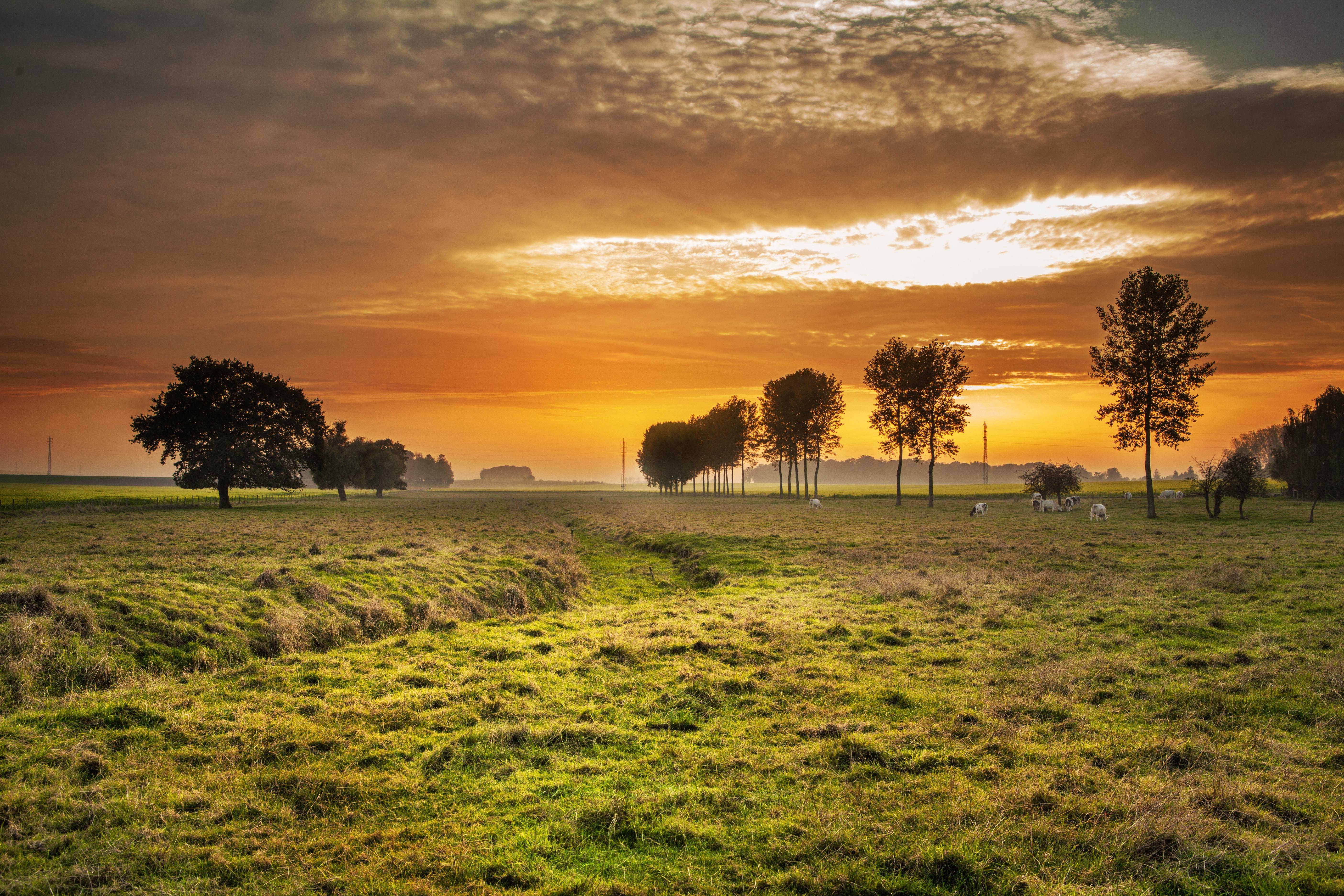 Gambar Pemandangan Pohon Alam Horison Awan Langit Matahari