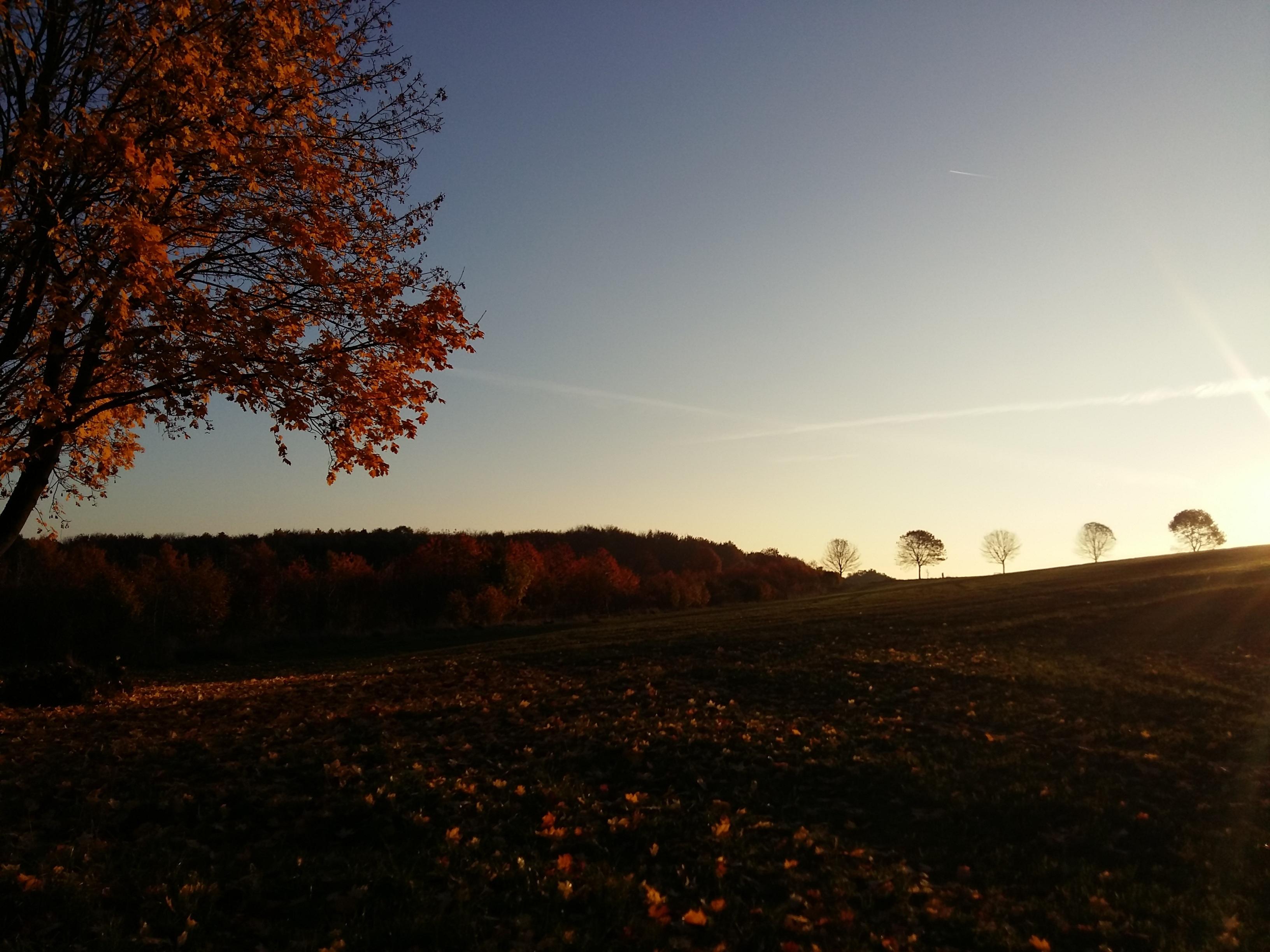 Gambar Pemandangan Pohon Alam Horison Gunung Awan