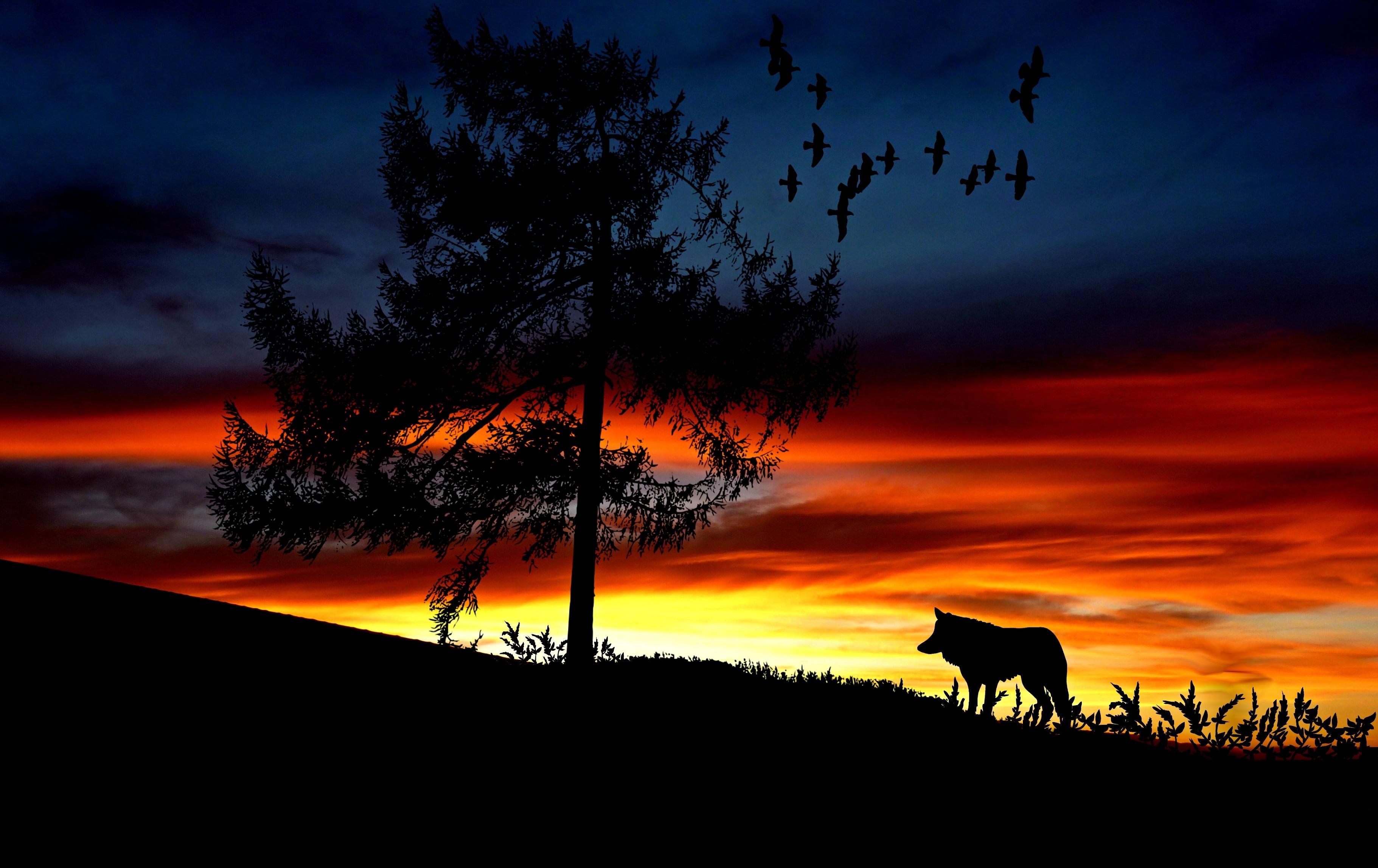 Gratis Afbeeldingen : landschap, boom, natuur, horizon, silhouet ...