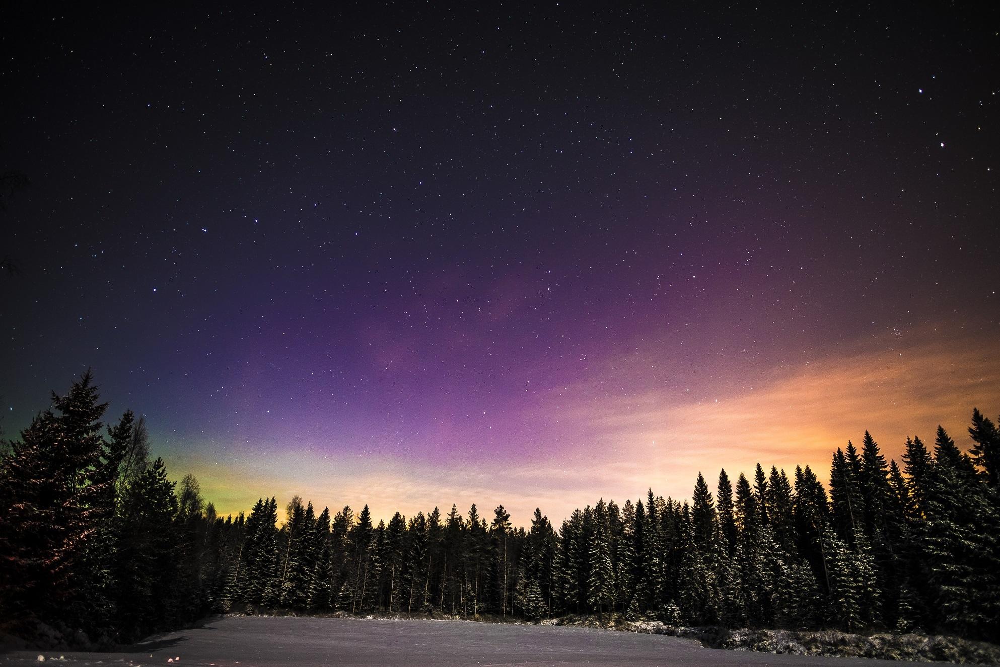 Gambar Pemandangan Pohon Alam Horison Salju Musim Dingin