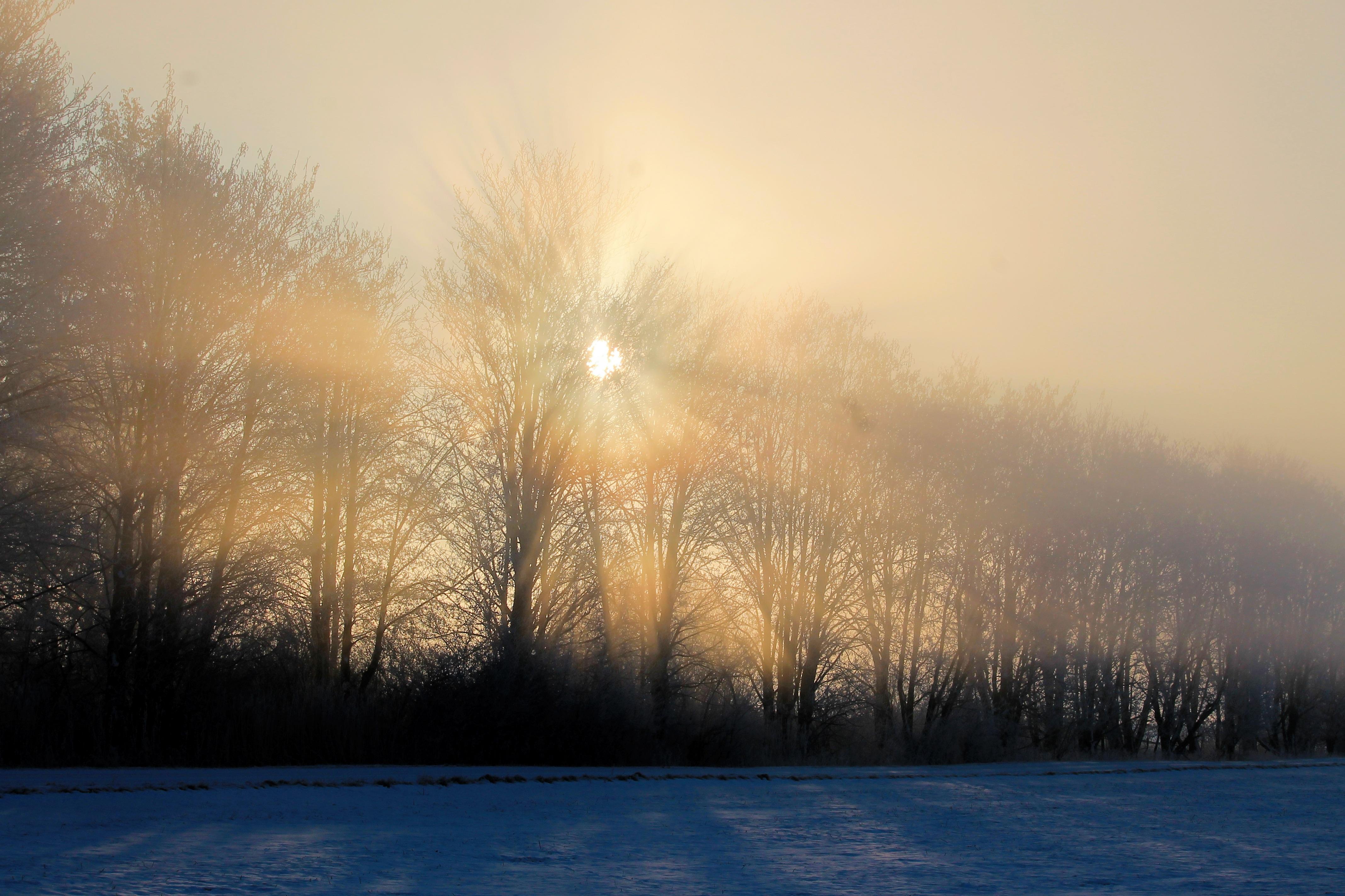 kostenlose foto landschaft baum natur horizont schnee licht wolke sonne nebel. Black Bedroom Furniture Sets. Home Design Ideas