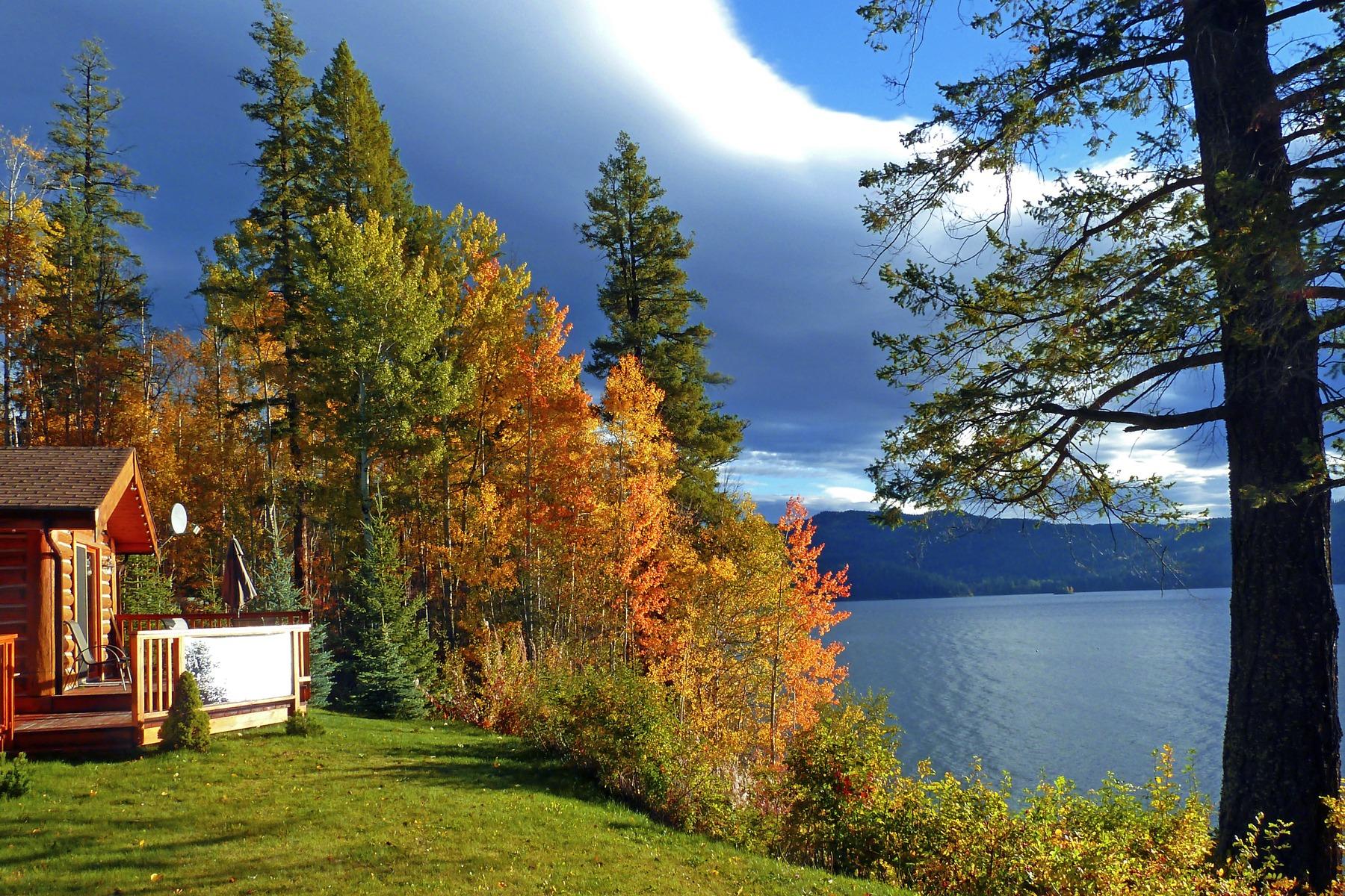 Kostenlose Foto Landschaft Baum Natur Wiese Blatt Fallen