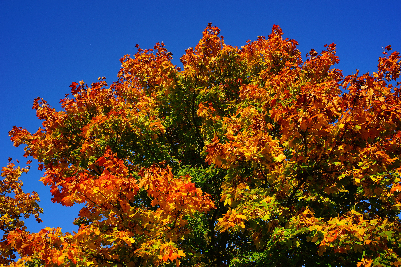 Poze Peisaj Copac Natură Munte Cer Frunze Floare