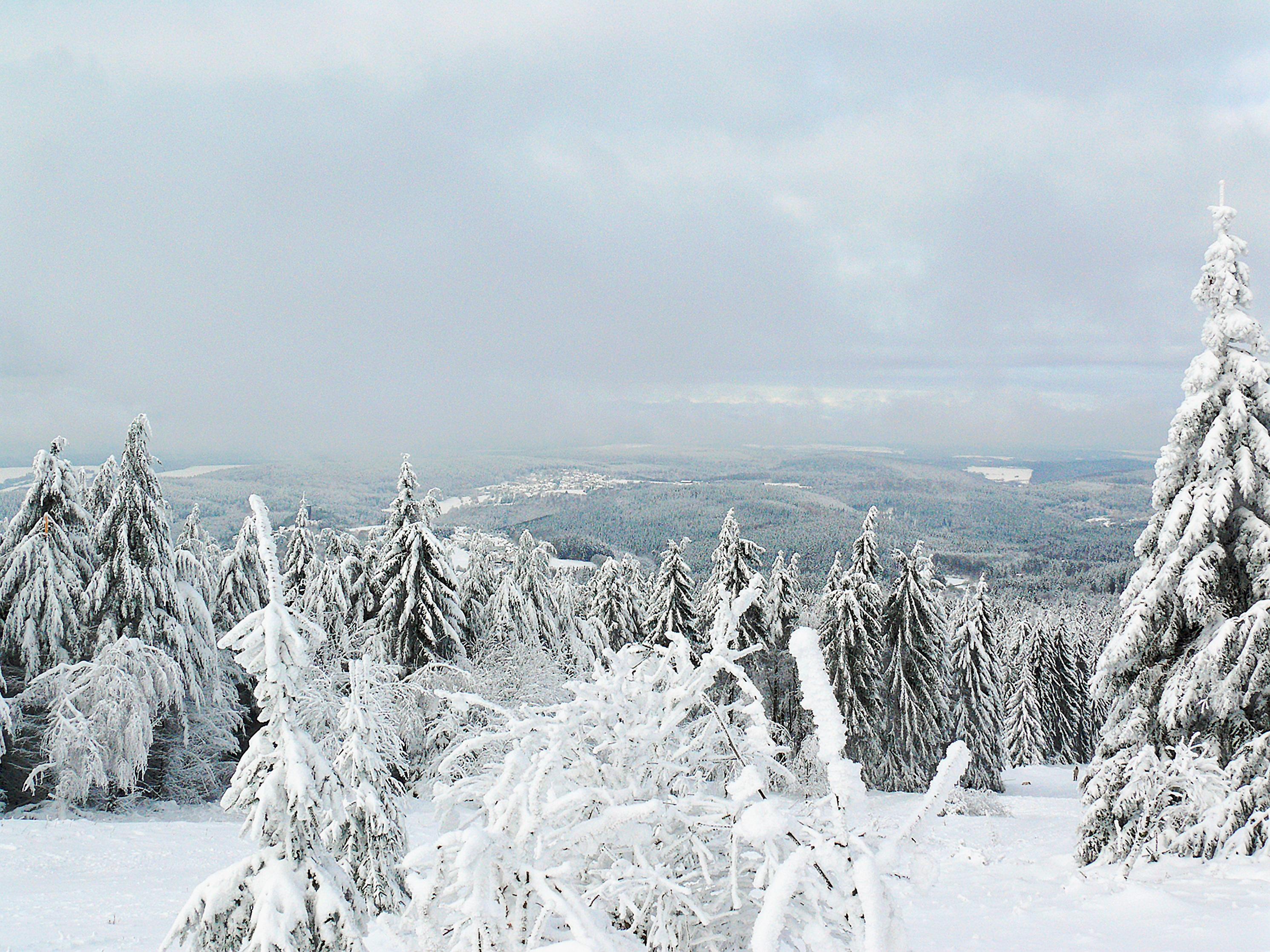 Images Gratuites Paysage Arbre La Nature Montagne