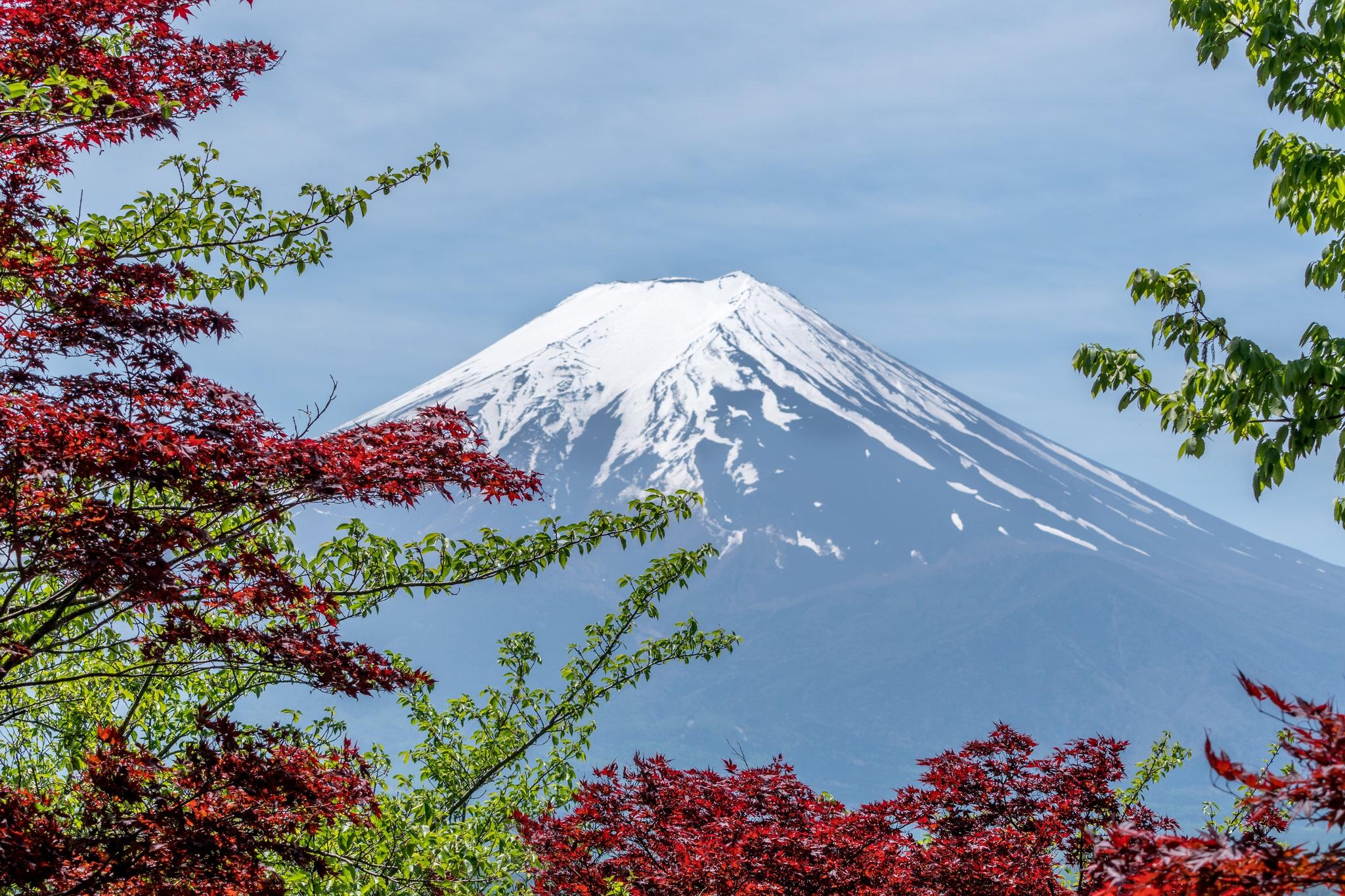 Gambar Pemandangan Pohon Outdoor Menanam Langit Daun Bunga