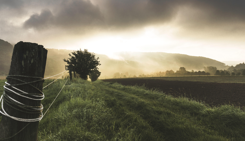 Kostenlose foto : Landschaft, Baum, Natur, Pfad, Gras, Horizont ...